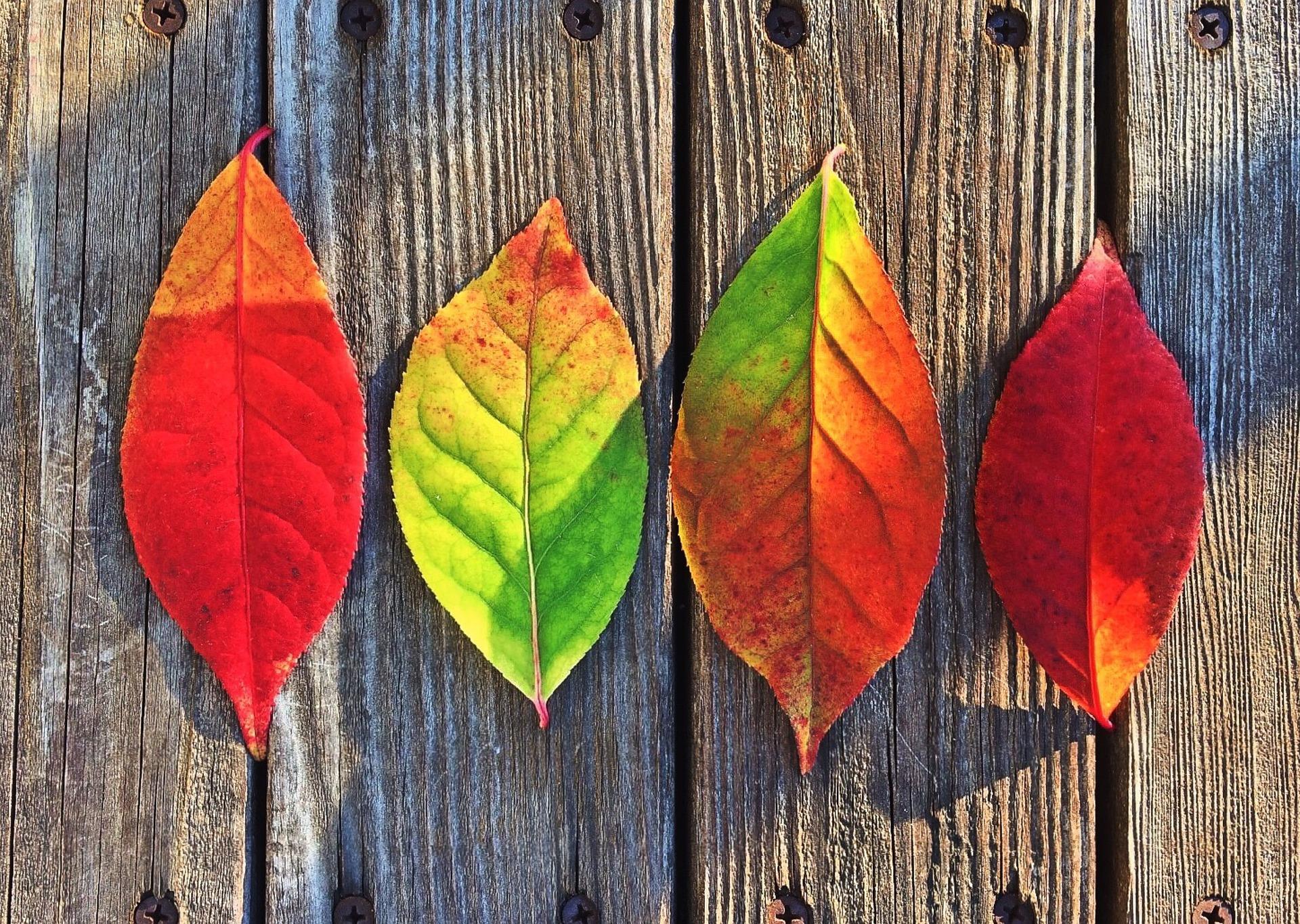 seasons leaves.jpg