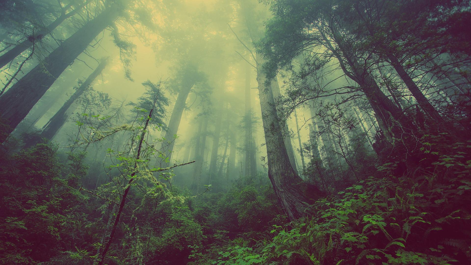 forest-fog-no path - 931706_1920.jpg