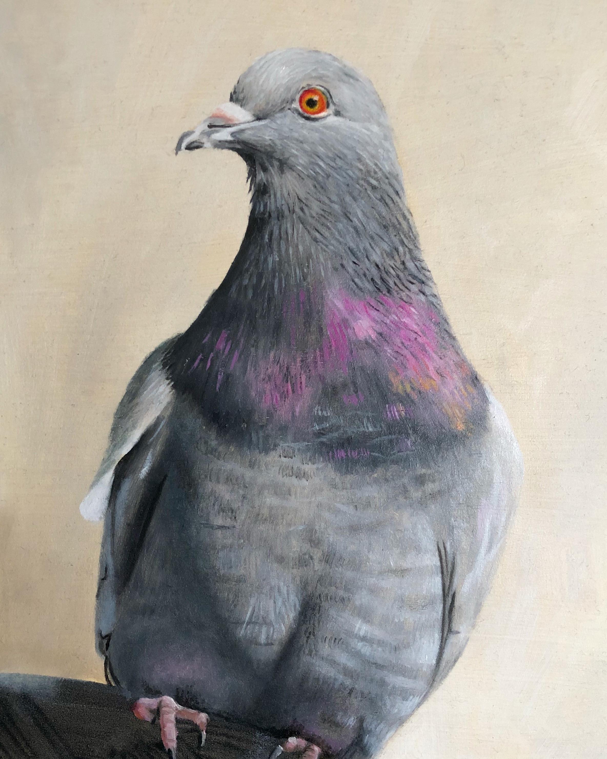 Sam's pigeon study,  2018,   oil on wood panel, 15x20cm.