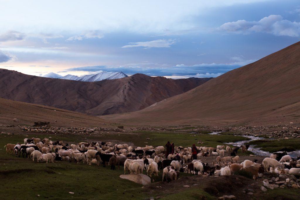 Woman and Earth - Ladakh, India