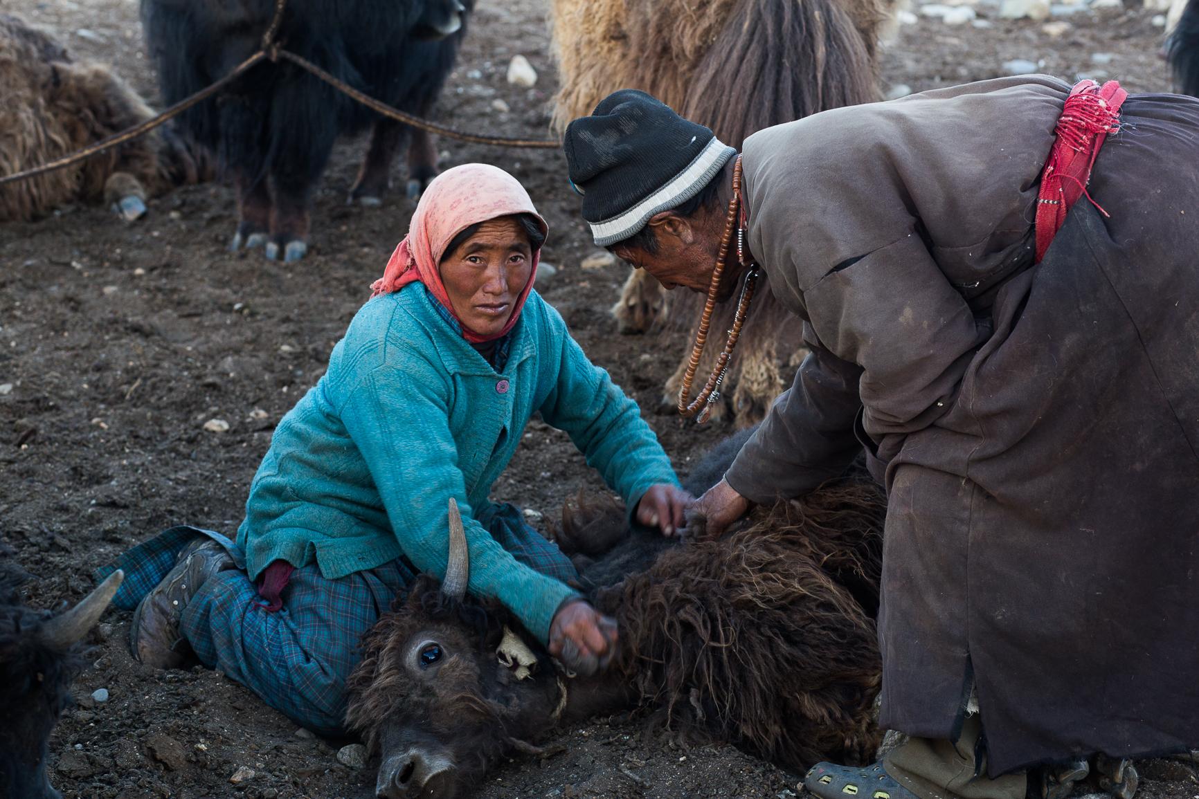 Irie_Langlois_Ladakh2.jpg