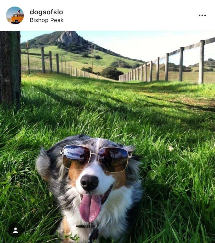 instagram post of dog at Bishop Peak in San Luis Obispo