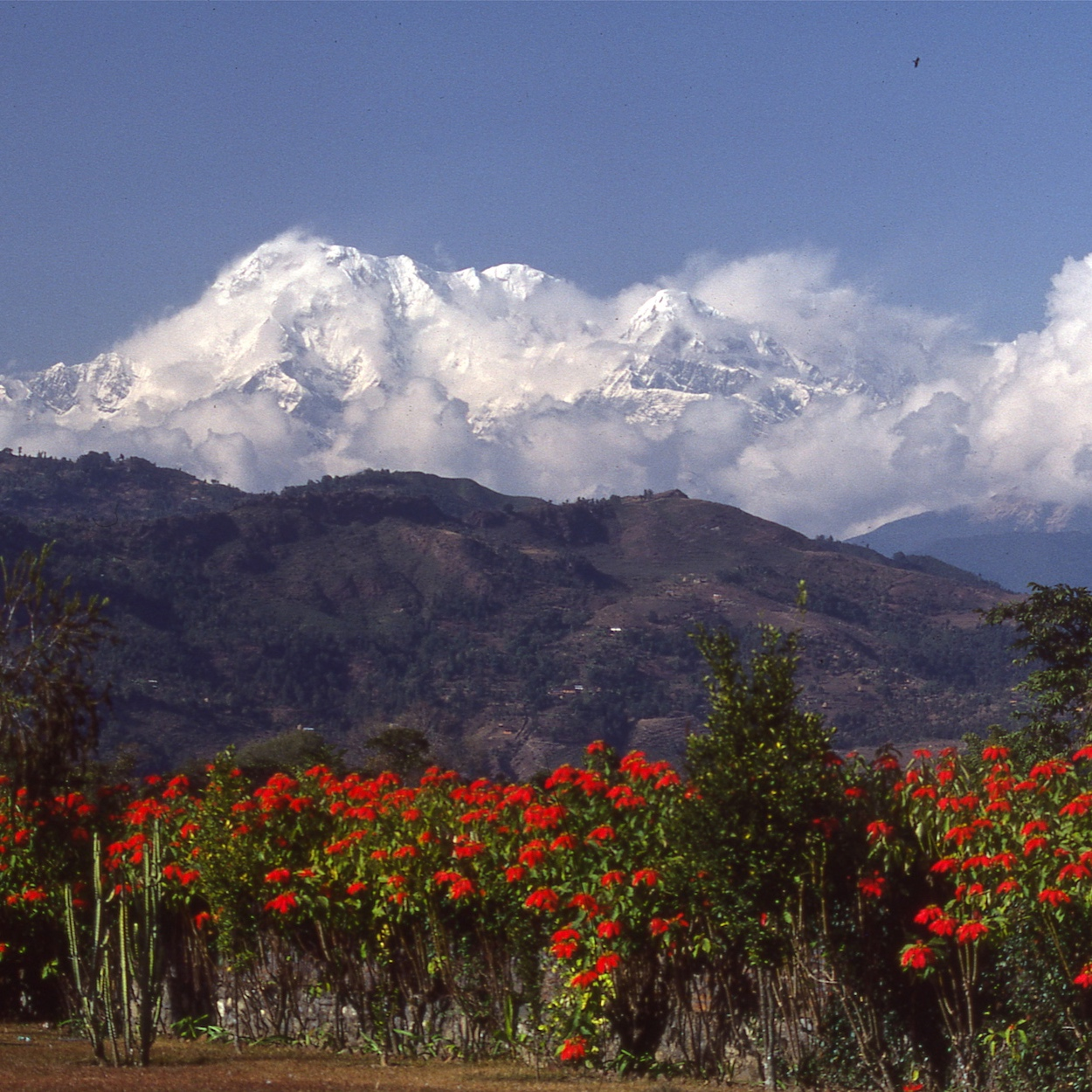 March 20 - Ascend through thick Rhododendron forests and look for Langur monkeys on route to DeuraliRemarkable views much of the day of Annapurna South, Hiunchuli and Macchapuchare