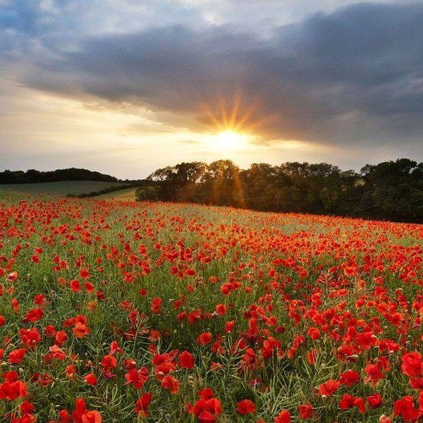 We will remember them #ANZAC  #torostapasandbardarlingharbour