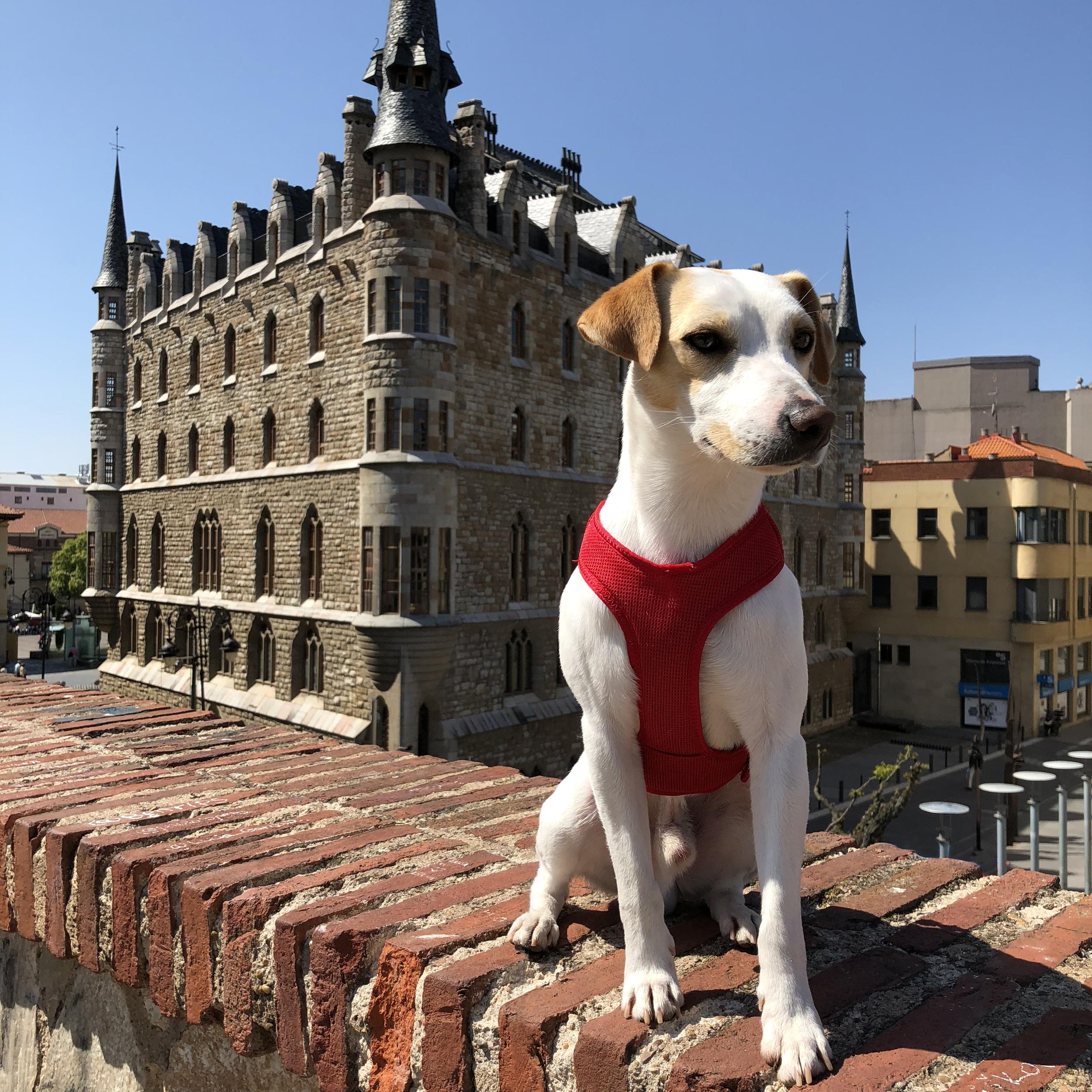 Gaudi's Casa Botines, in León.