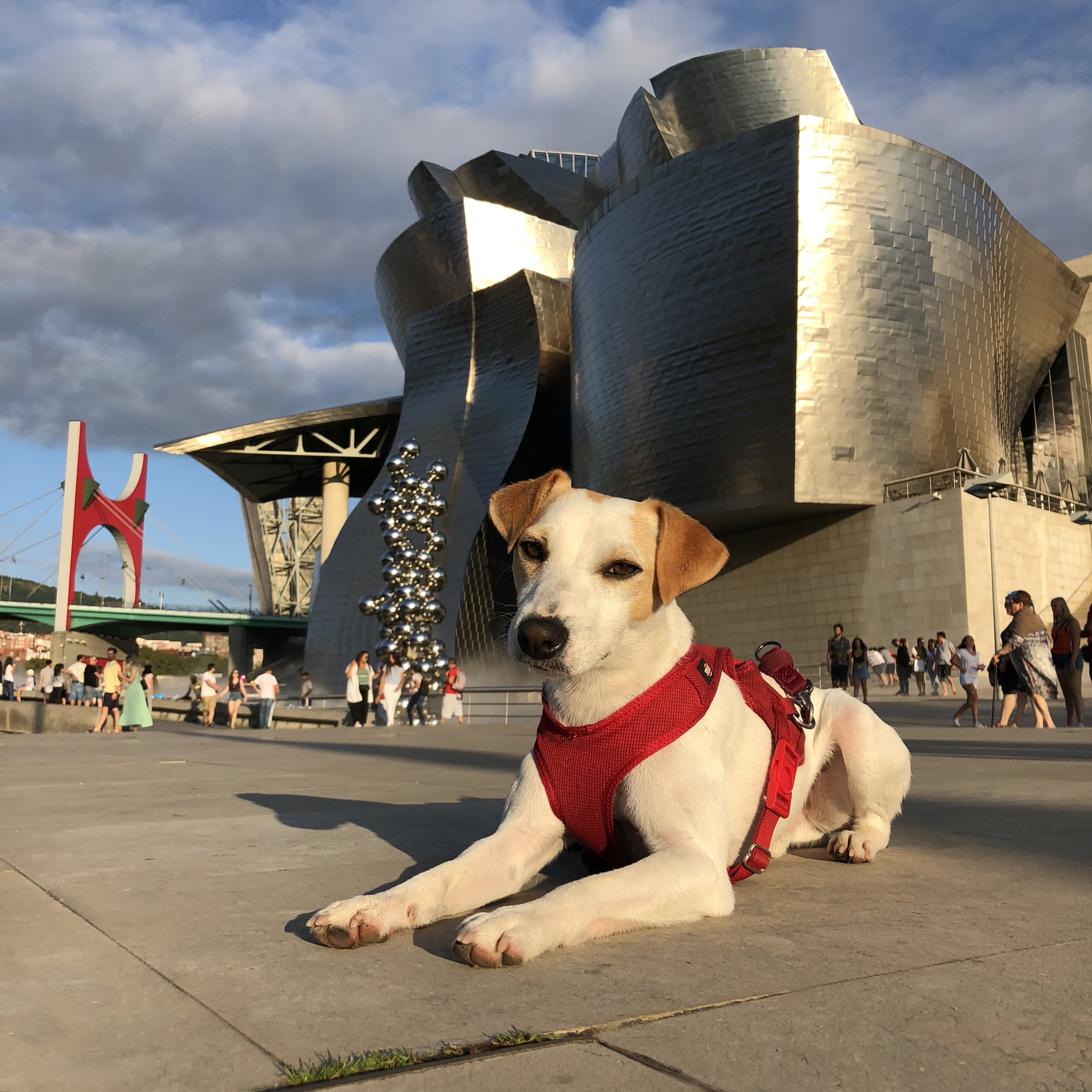 At the Guggenheim Museum.