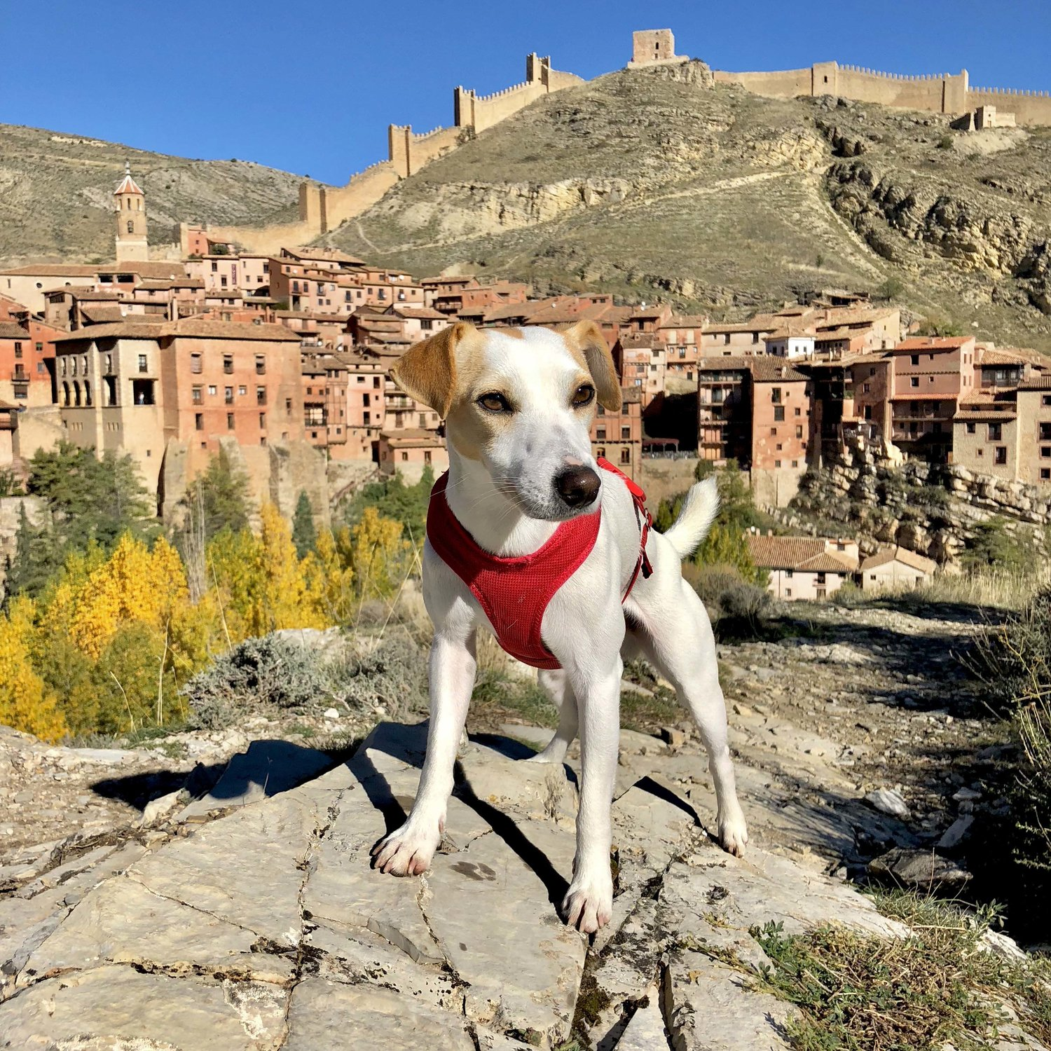 Pipper in Albarracín.