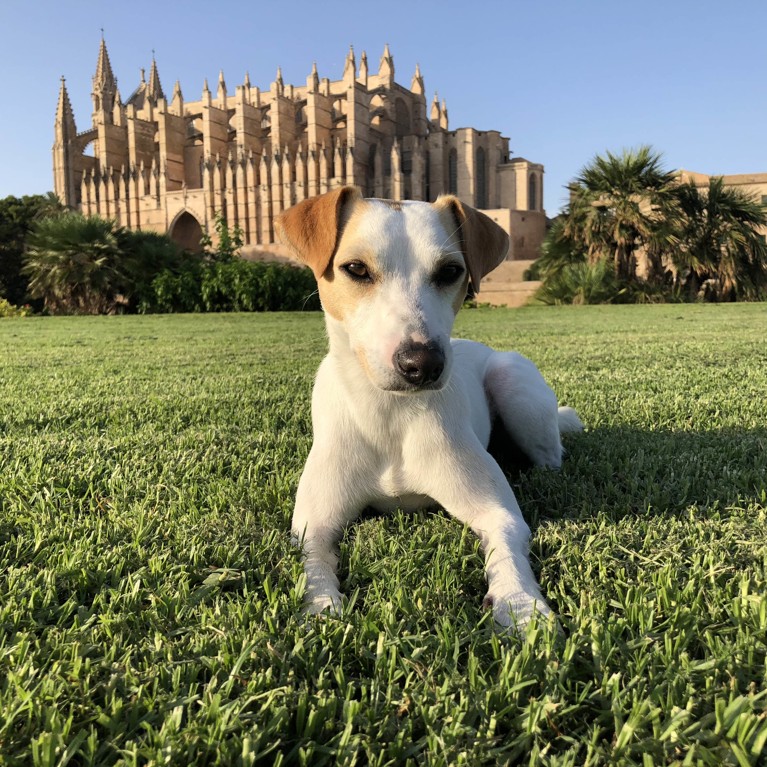 In front of the Palma Cathedral.