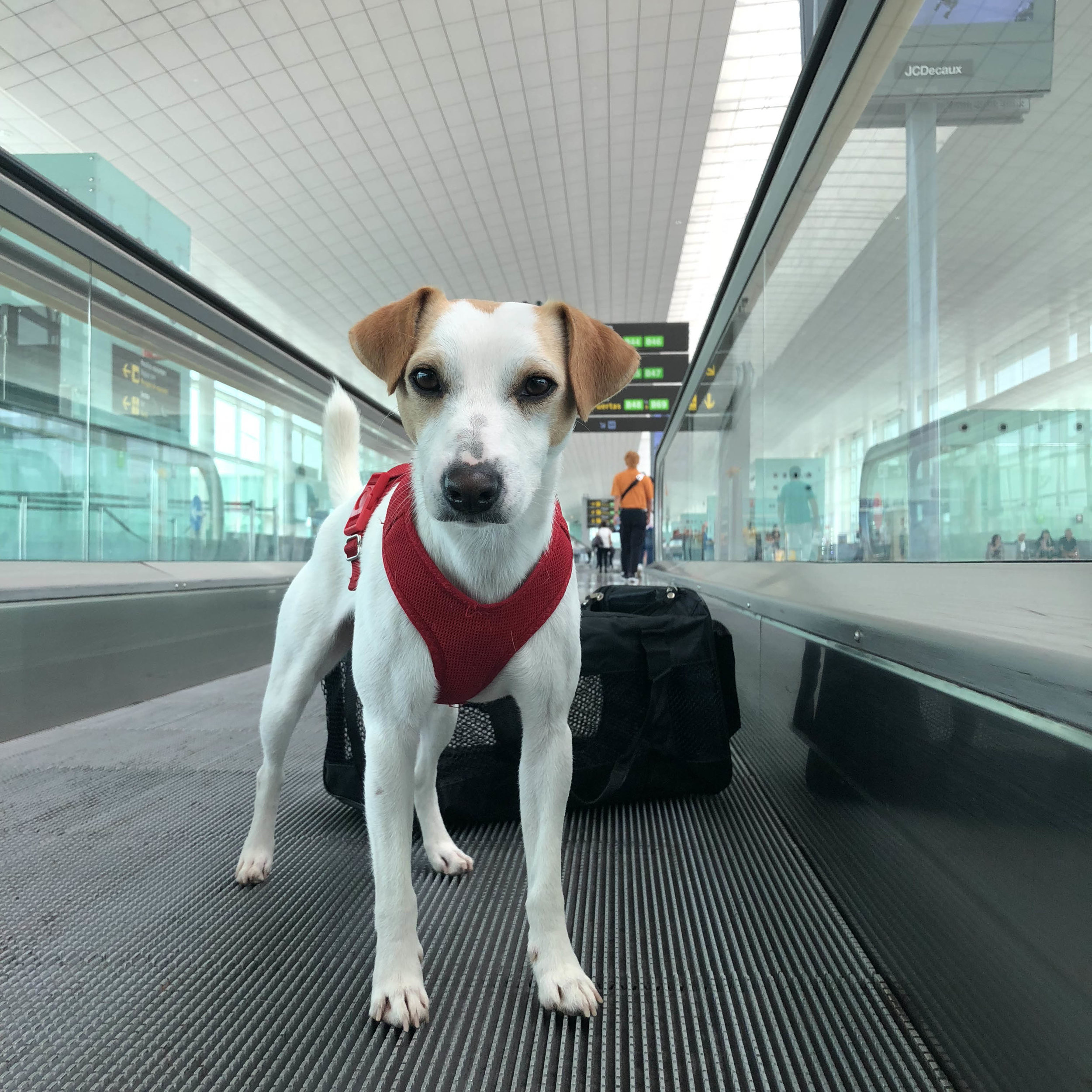 The awesome dog zone in the Palma airport.