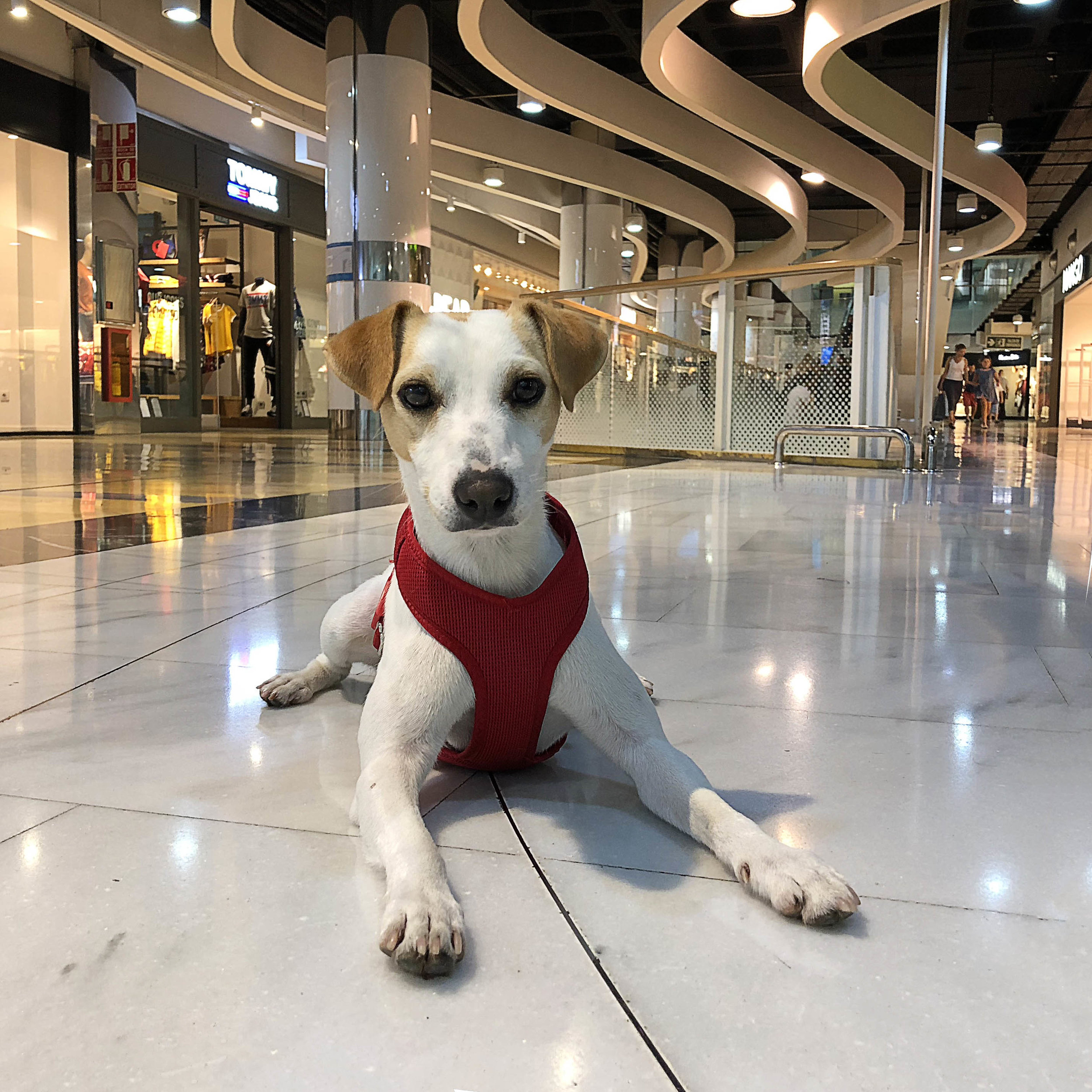 In Porto Pi shopping center.