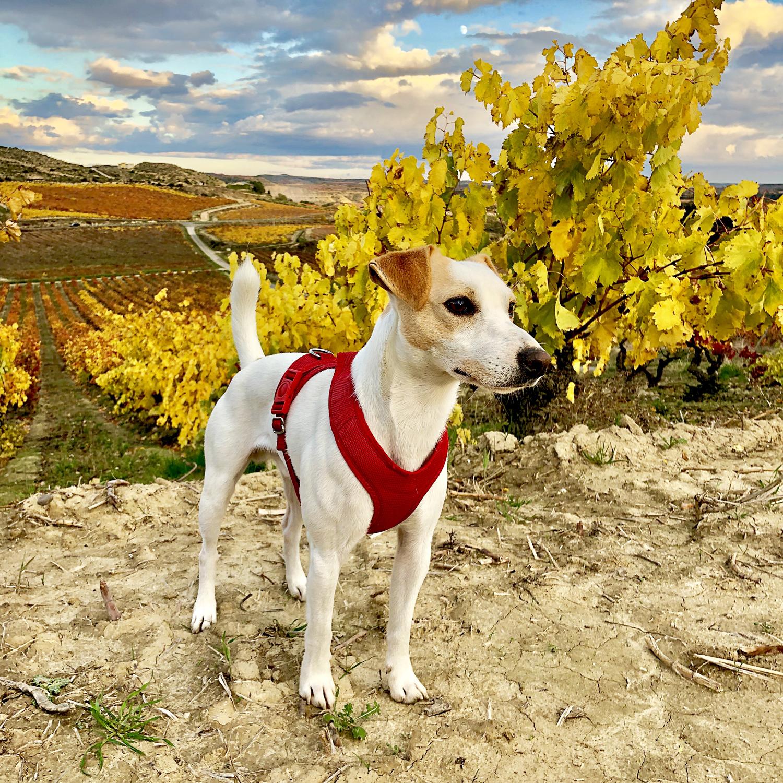 Among the vineyards.