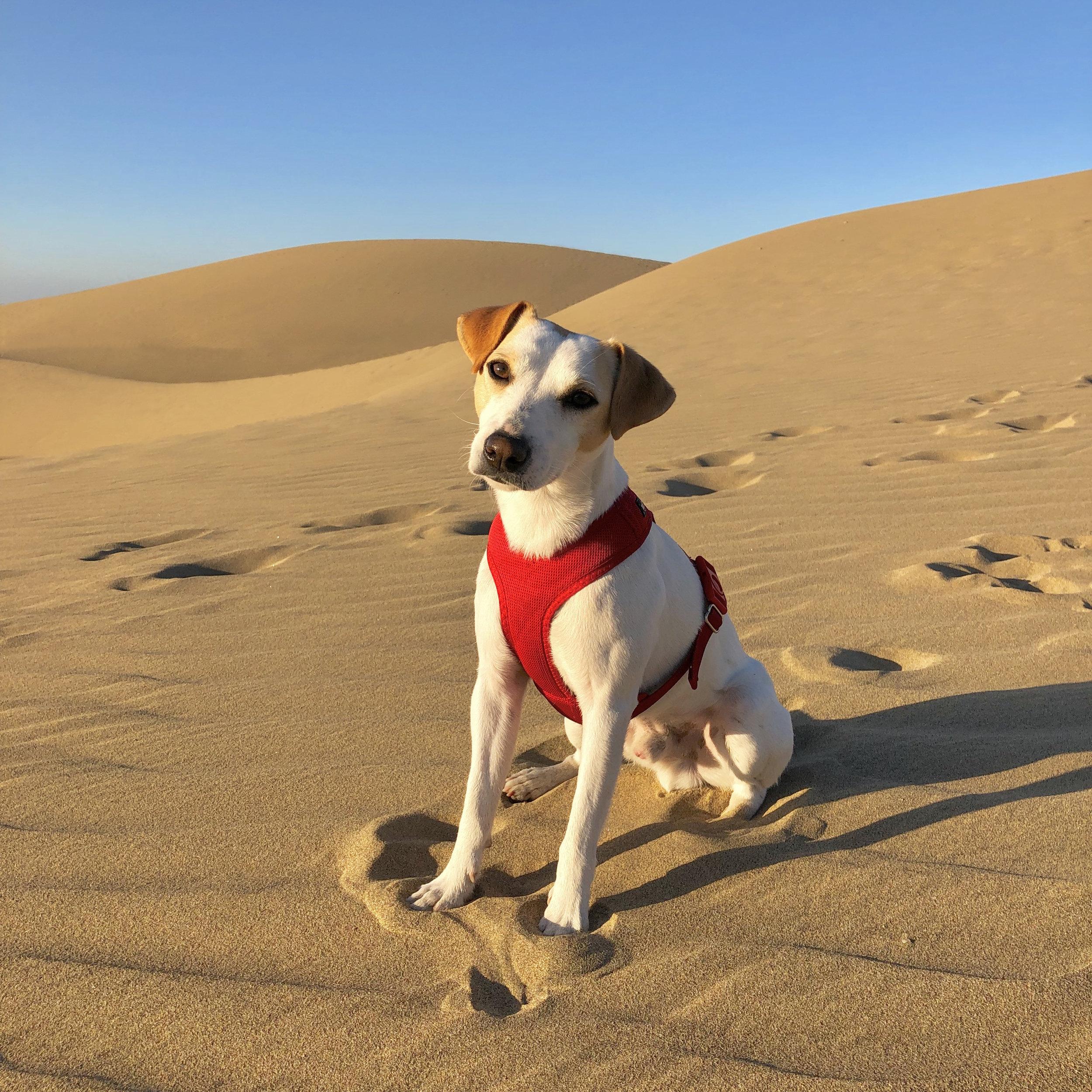 In the dunes of Maspalomas.