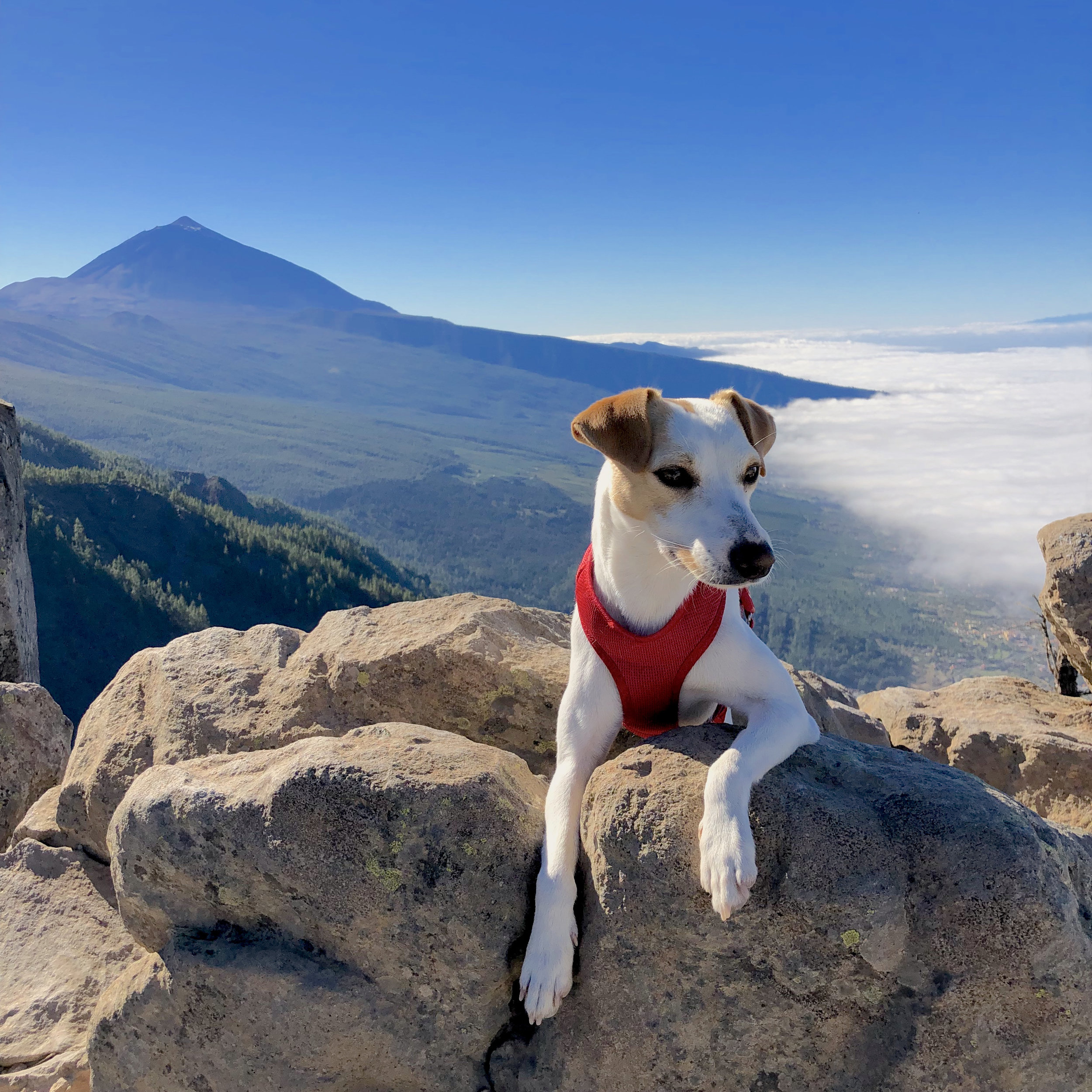 A sea of clouds from Teide.