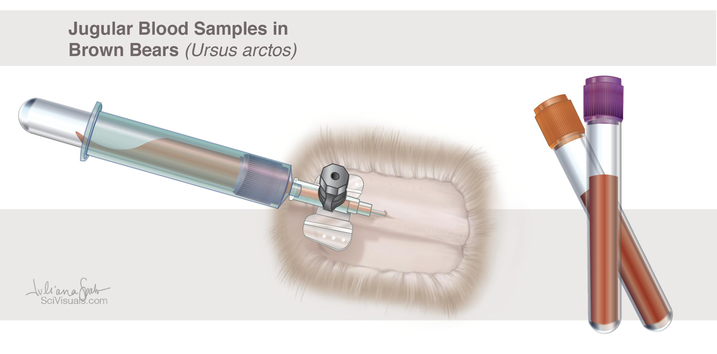 Jugular Blood Samples