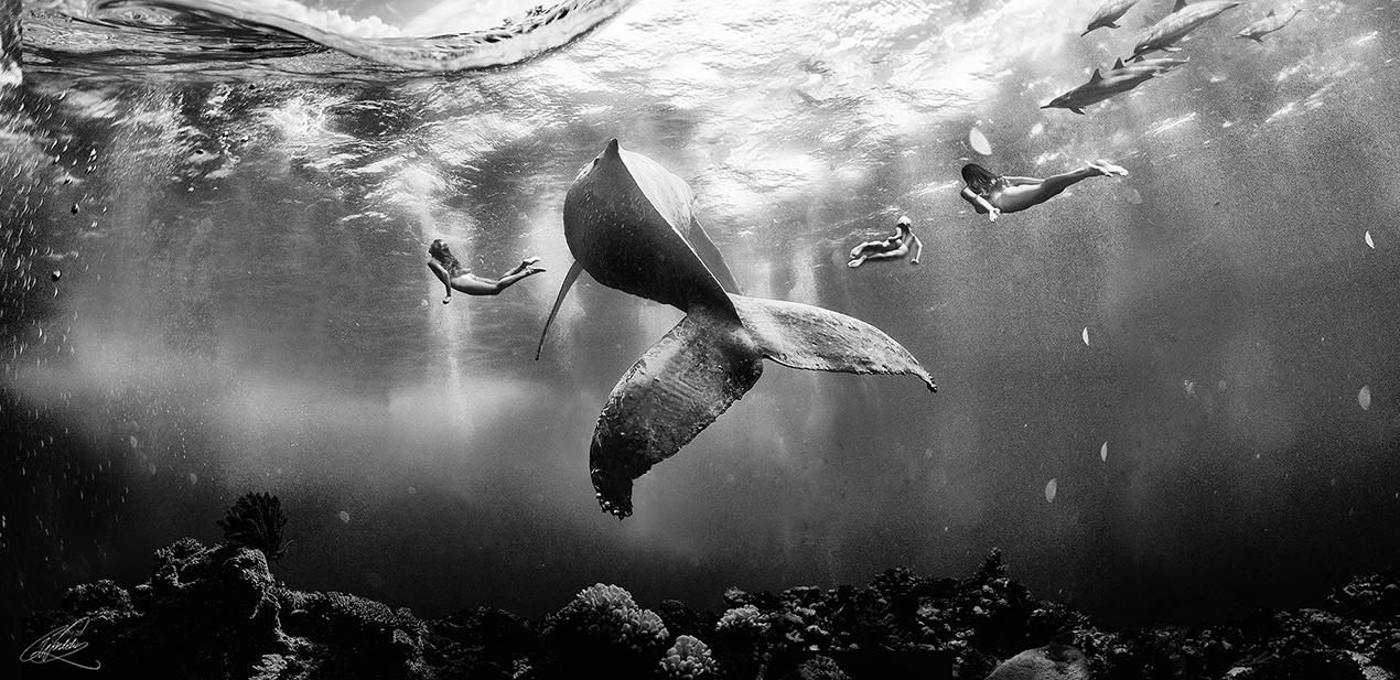Stories From the Ocean III