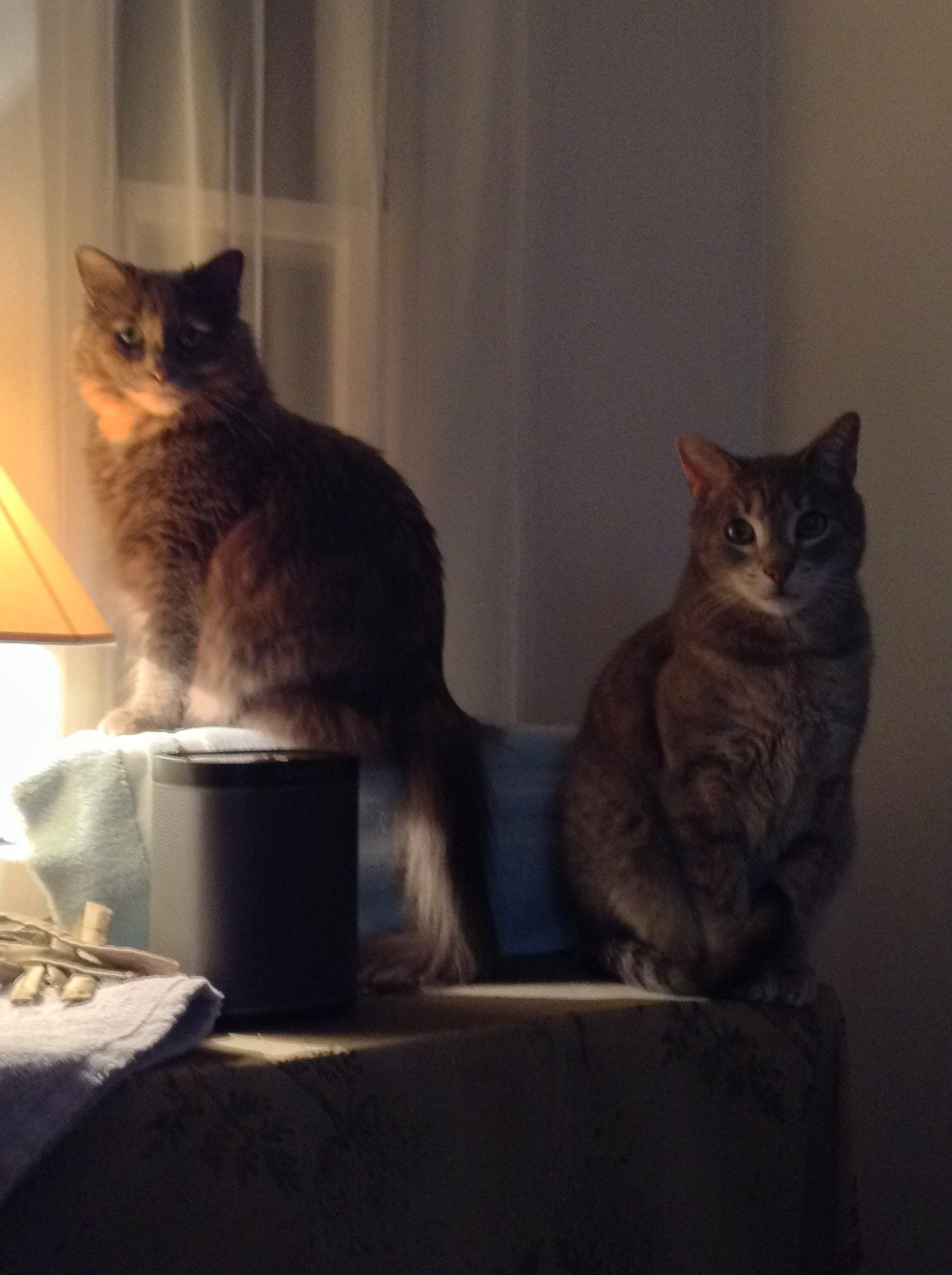 Editorial Assistants Charlotte and Mr. Darcy