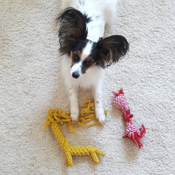 Sam mit seinem Tauspielzeug...oder dem, was davon übrig ist :D