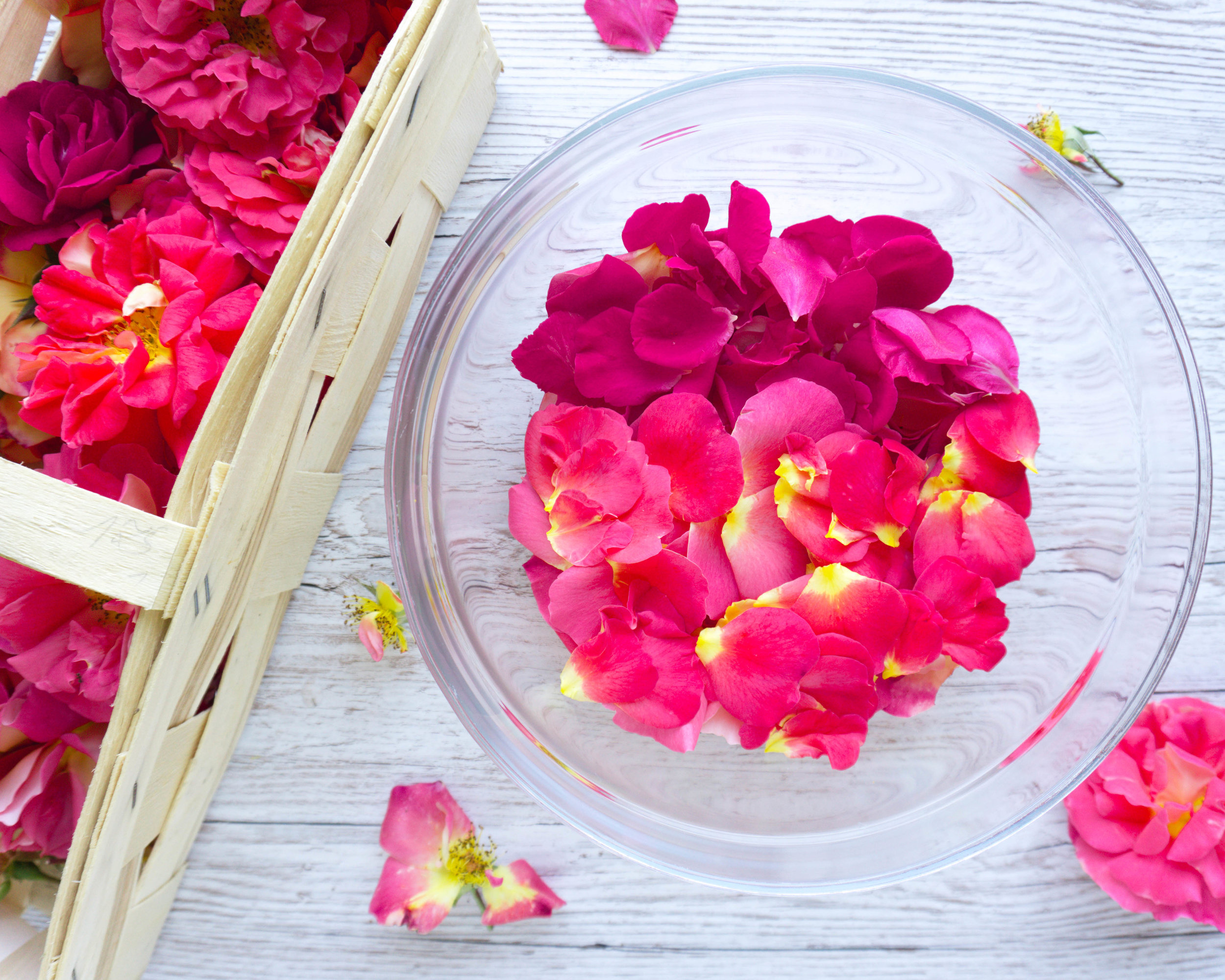 Ich hab mich für eine Mischung aus toll duftenden und stärker gefärbten Rosen entschieden. War eine gute Idee, denn Geschmack und Farbe sprechen für sich! (kleiner Tipp am Rande: Such dir wirklich nur die schönsten Blütenblätter für dein Rosen-Gelée raus für das beste Ergebnis. Den Rest kannst du ja noch trocknen und z.B. für  selbstgemachte Badezusätze  verwenden )