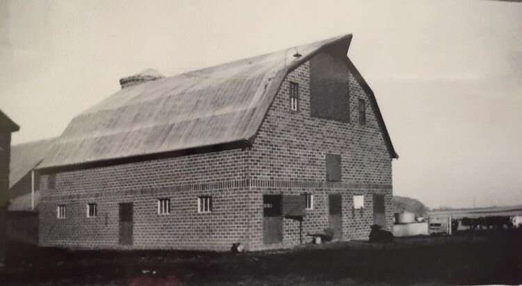 old+barn+cows.jpg