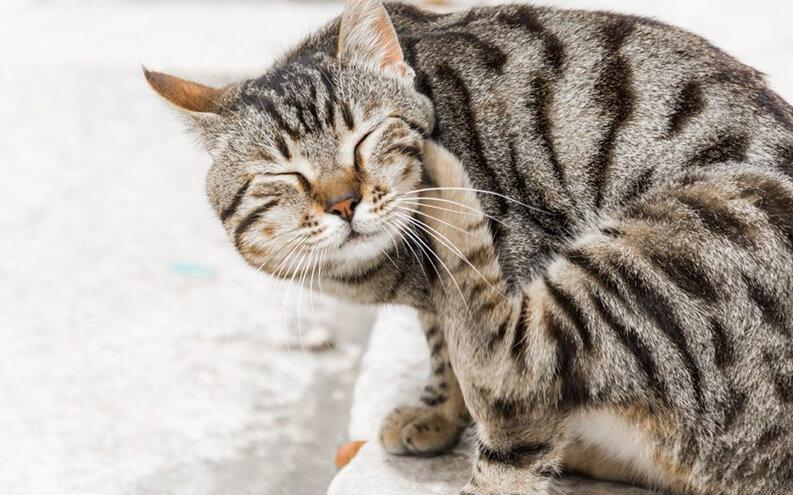 Advanced-Pet-Care-October-Newsletter-03.jpg