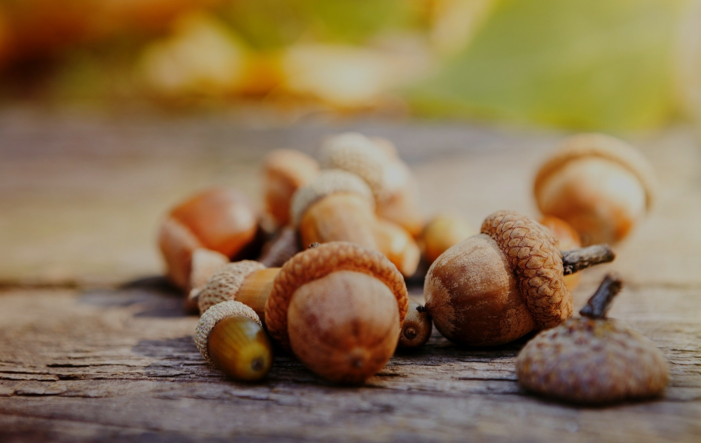 An acorn is small... - but it can also be the start of something big.