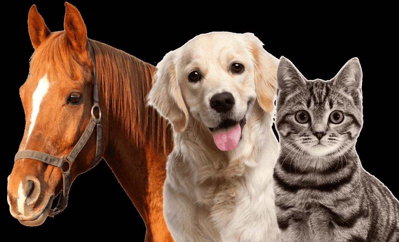 Contact Us — Hadlock Integrative Veterinary Consulting