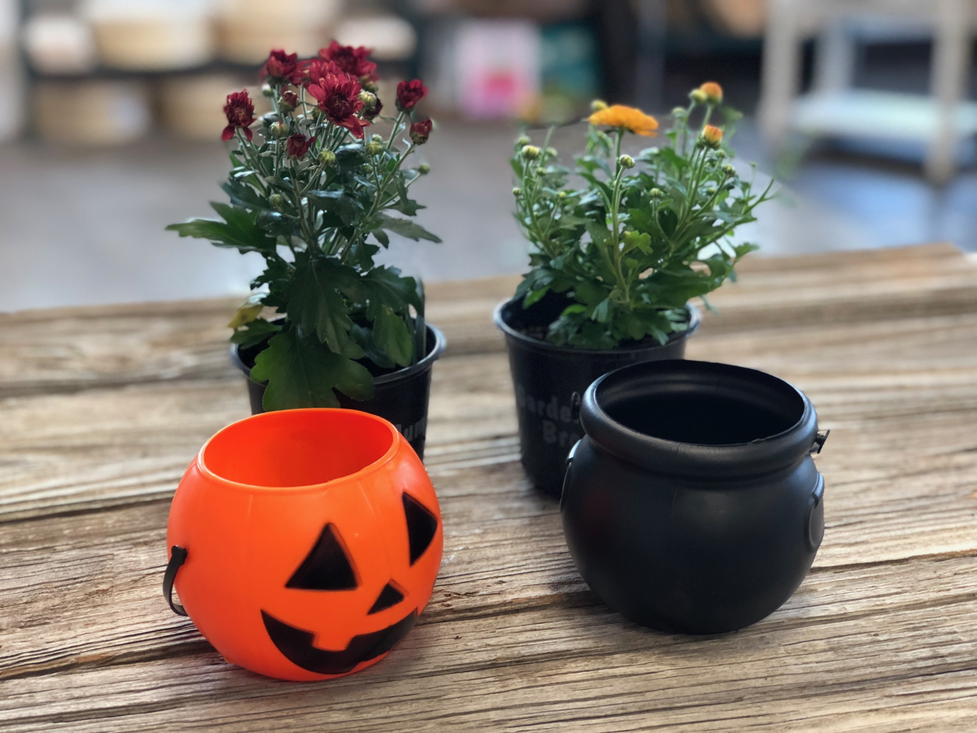 Easy and adorable mini mum planters for less than $2, get the look with this tutorial