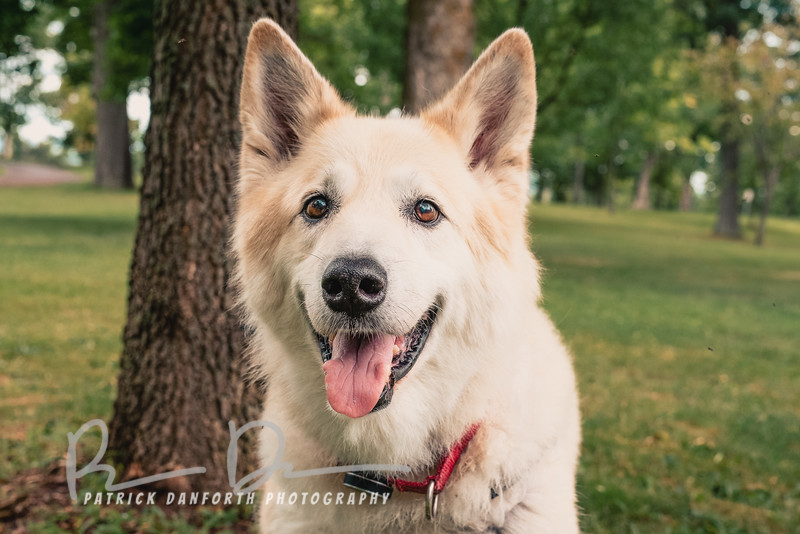 A picture of Molly at Thompson Park (Watertown, NY), courtesy of Patrick Danforth Photography.