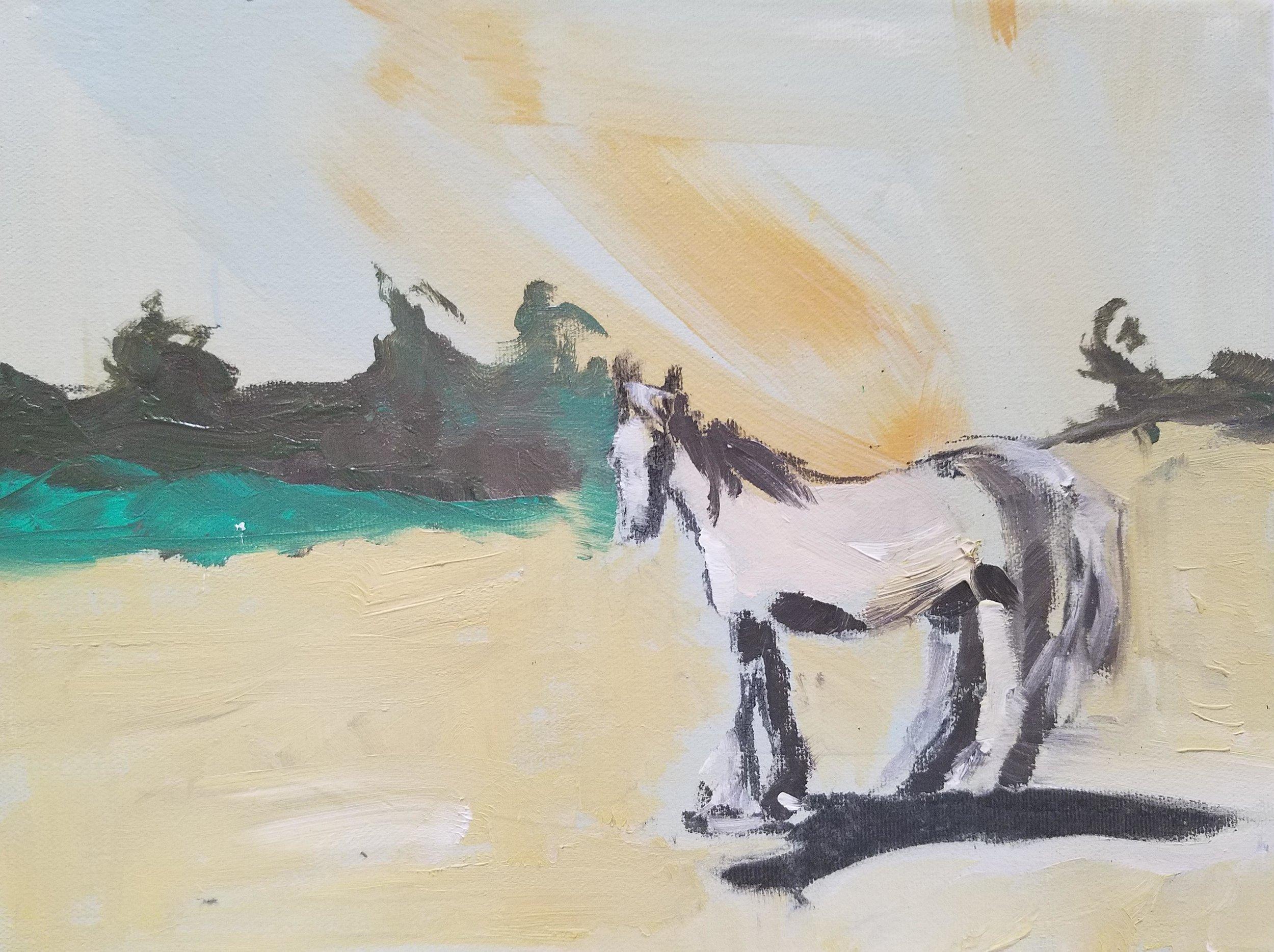 Patti Smith: Ma cheval Namibie, Afrique