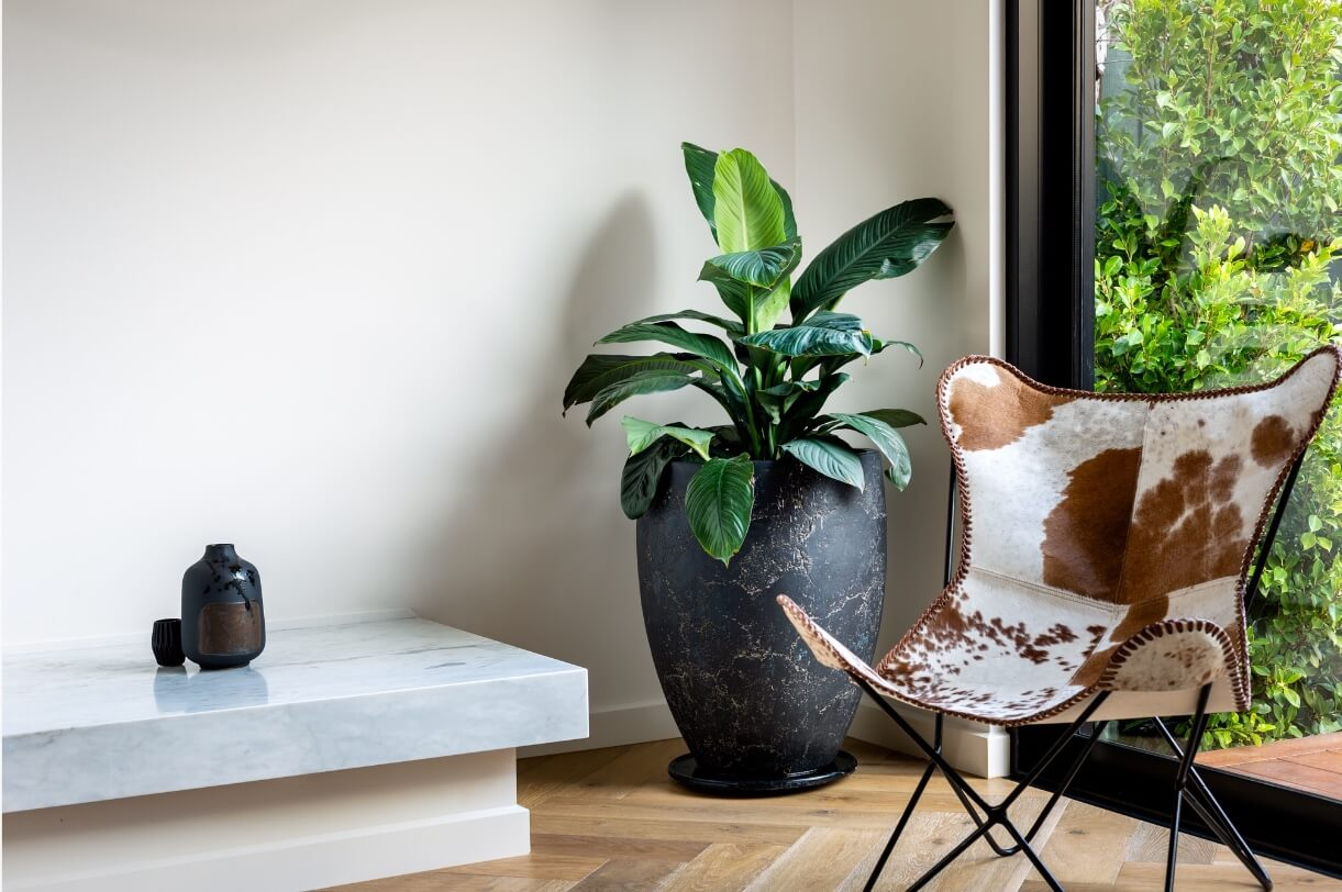 Indoor plant styling