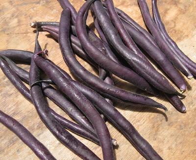 bean pods purple.jpg