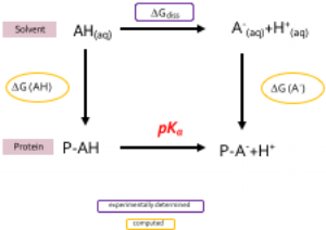 Thermodynamic cycle for the pKa calculations