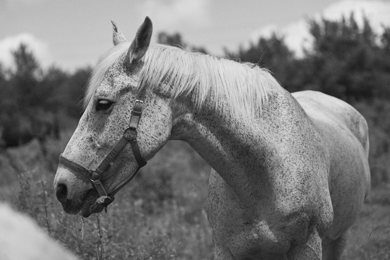lovas napközi - Aki nem tudja elhozni, nem tudja megvárni, de mégis szeretné, ha a gyermeke hétköznap lovagolna és még a leckéje is elkészülne...