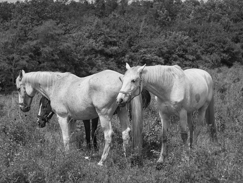 oktatás - Célunk, hogy megszerettessük a gyerekekkel a lovakat és a természetet, hogy kiragadjuk őket a mindennapok harsogó zűrzavarából