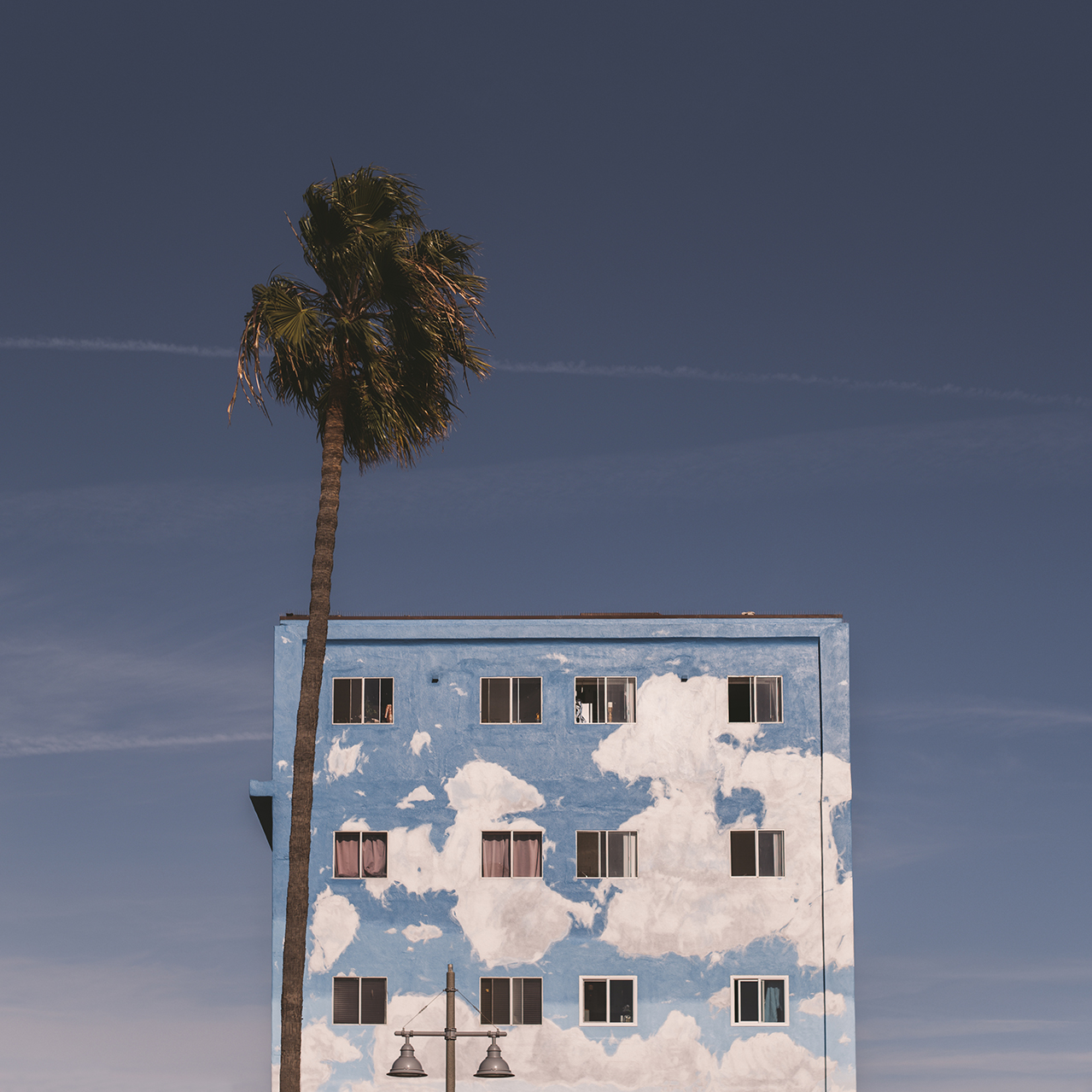Los-Angeles-Travel-Photographer-Stacey-Lamb-Palm-Tree-Venice-Beach.jpg