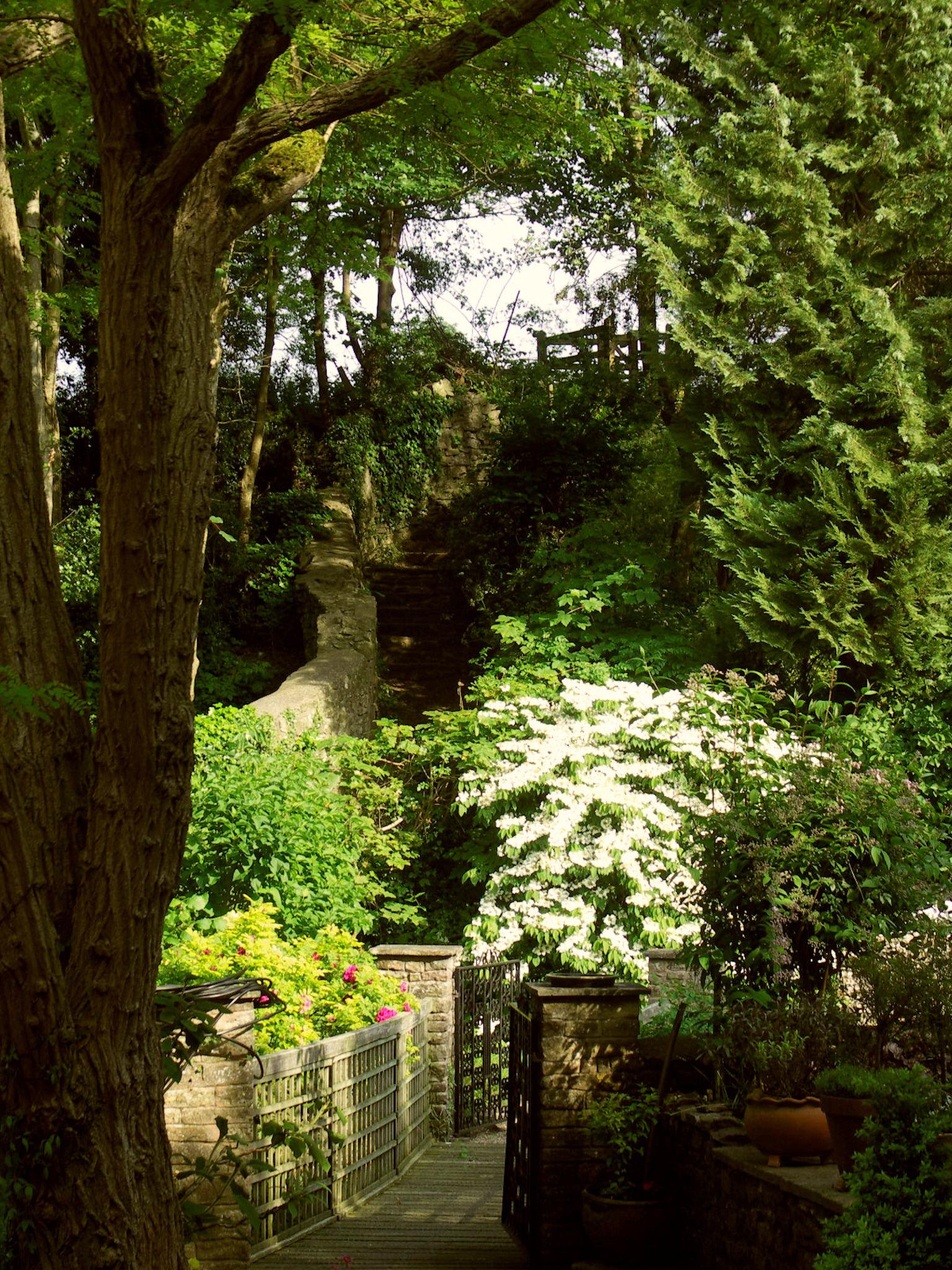 A view through the Acacia towards the bridge