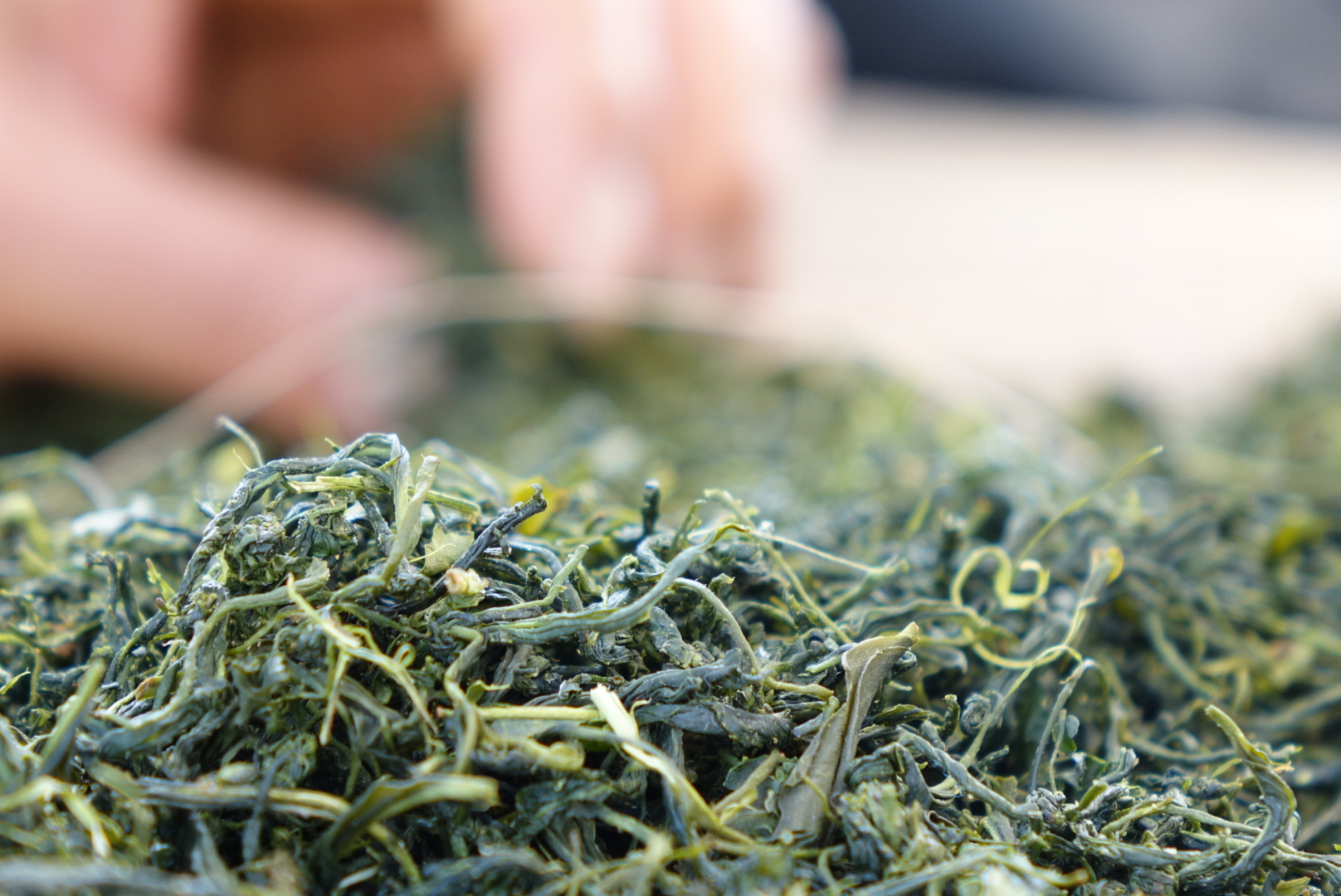 WANT TO BUY TEA FROM OBUBU?               Matcha.              Sencha.              Hojicha.and more....  -