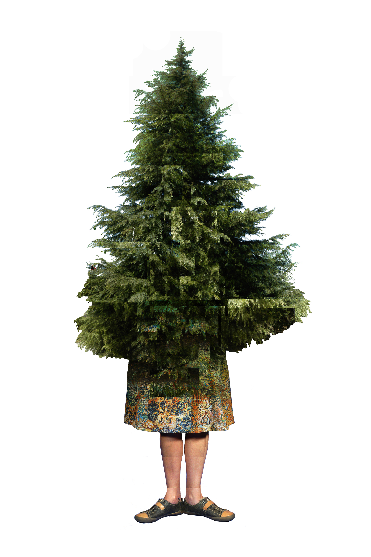 Mary Deodora Cedar, 2008/2014