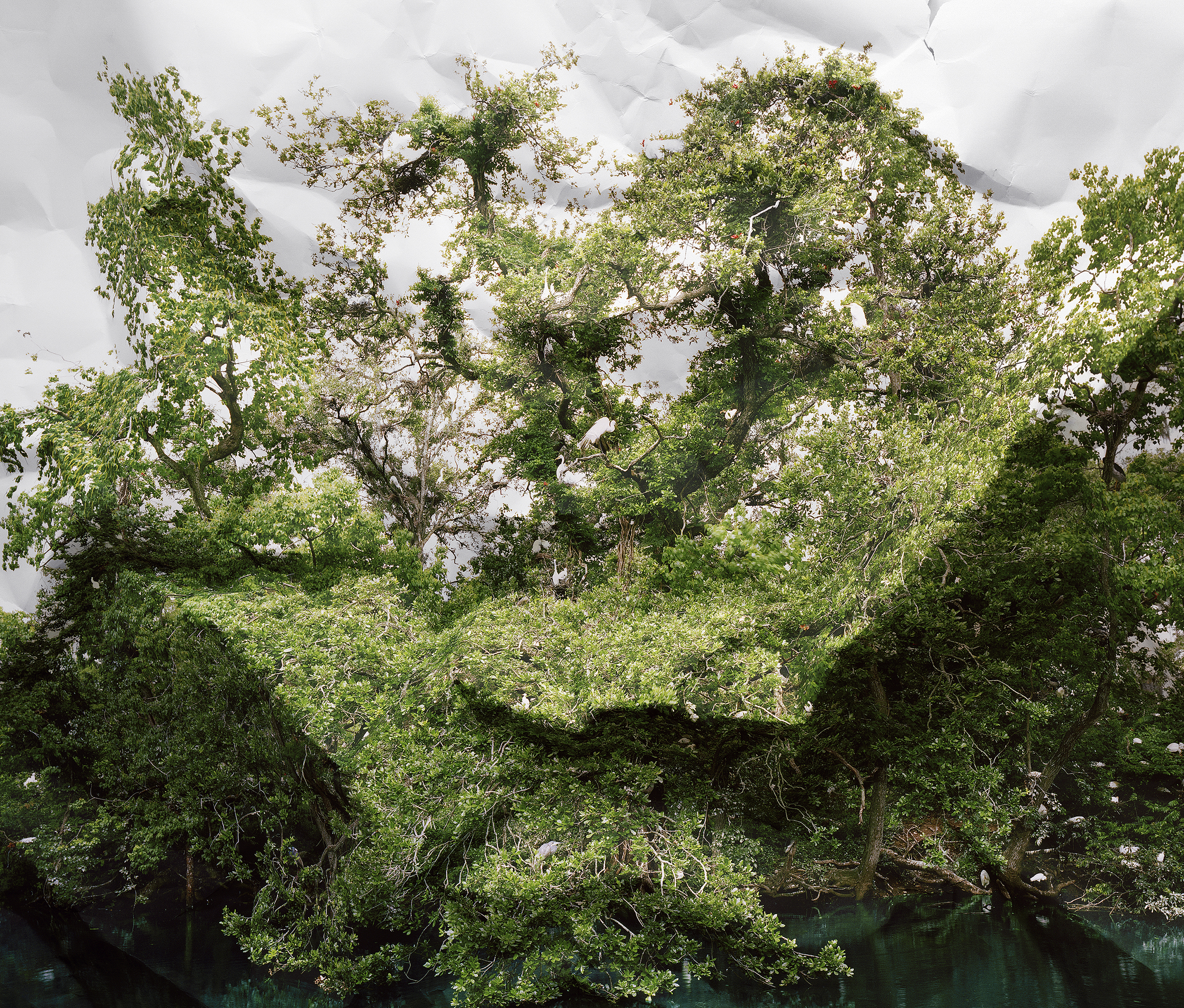 Laura Plageman,  Response to Egret Rookery, Louisiana , 2010  Digital pigment print, 30 x 35 in, edition of 10; 45 x 52.9 in, edition of 5   Inquire