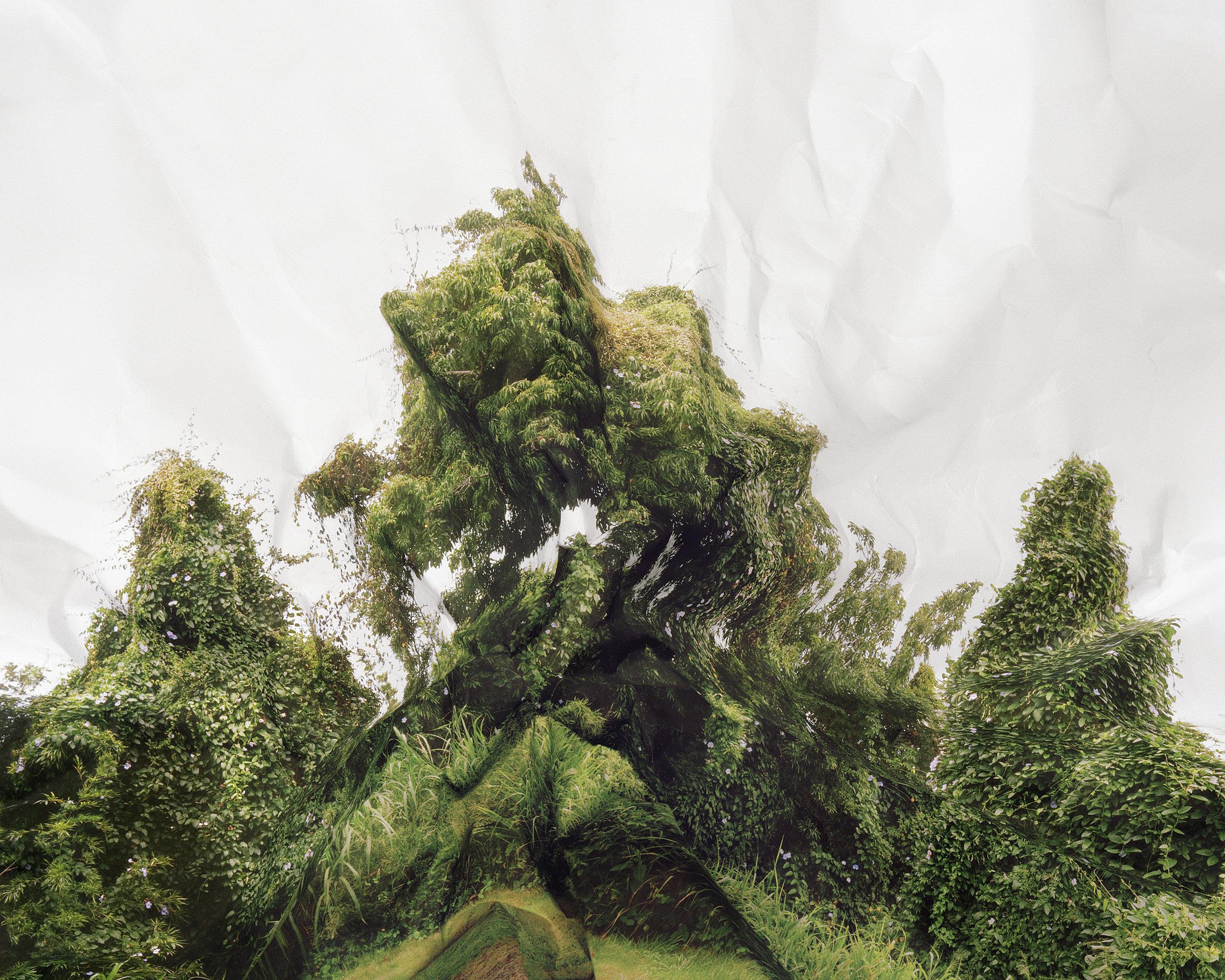Laura Plageman,  Response to Trumpet Vine, Hawaii , 2011  Digital pigment print, 16 x 20 in, edition of 10   Inquire