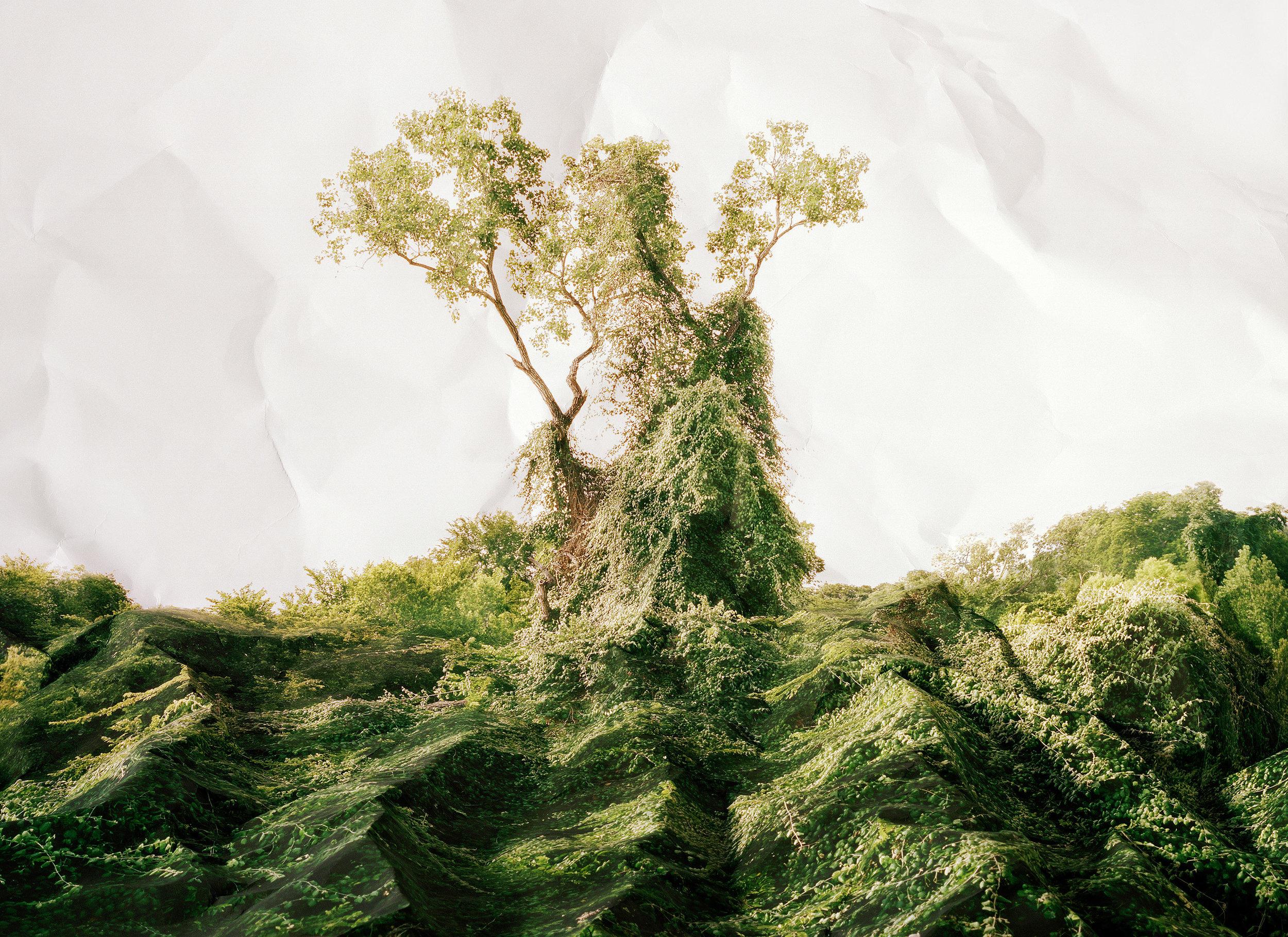 Laura Plageman,  Response to Kudzu, Texas , 2011  Digital pigment print, 30 x 40 in, edition of 4   Inquire
