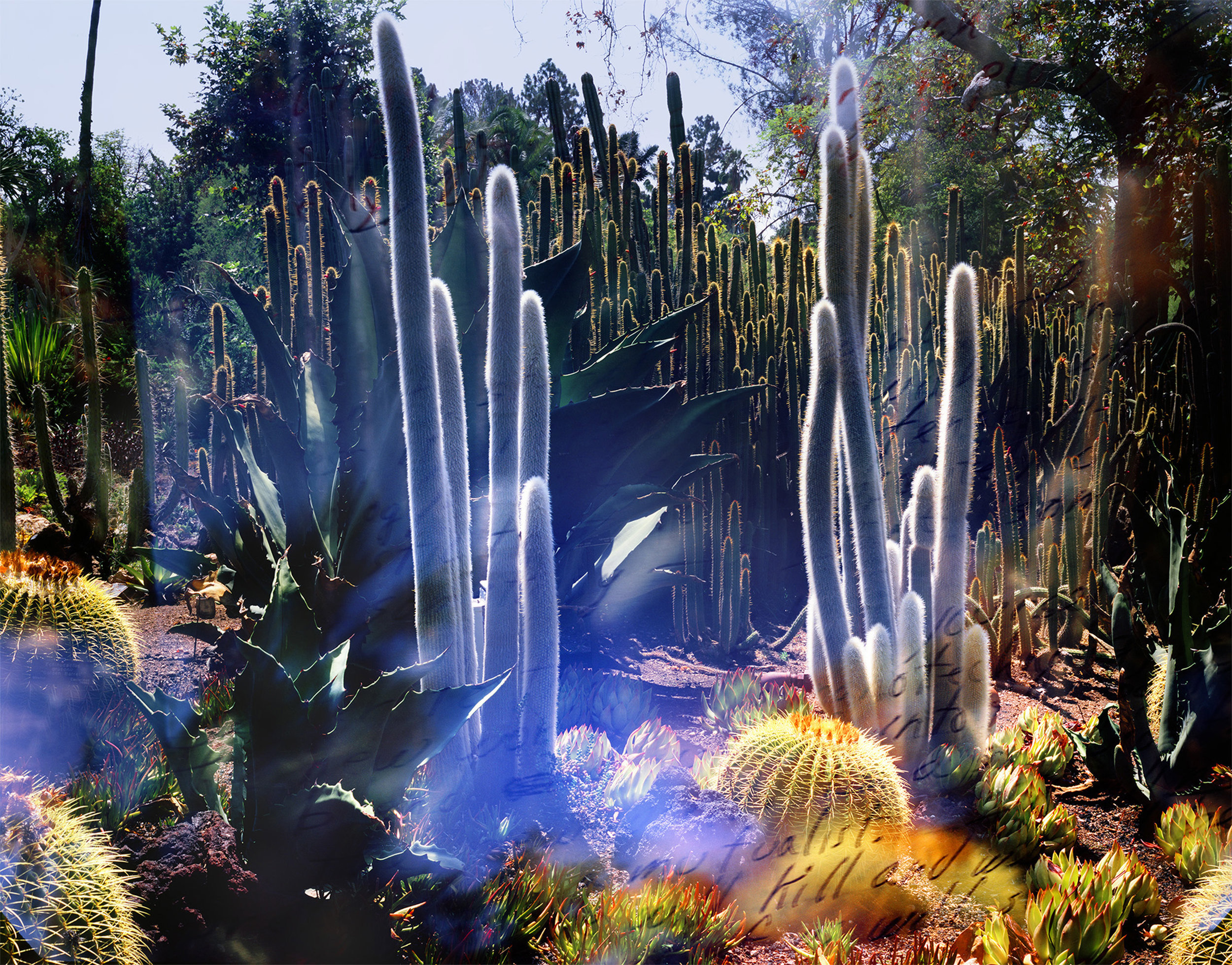 Connie Samaras,  The Past is Another Planet: Huntington Desert Garden (Cacti) and OEB 1723, novel fragment from the Parable of the Sower, 1989 , 2016  Digital pigment print, 36 x 46 inches (variable), edition of 5   Inquire