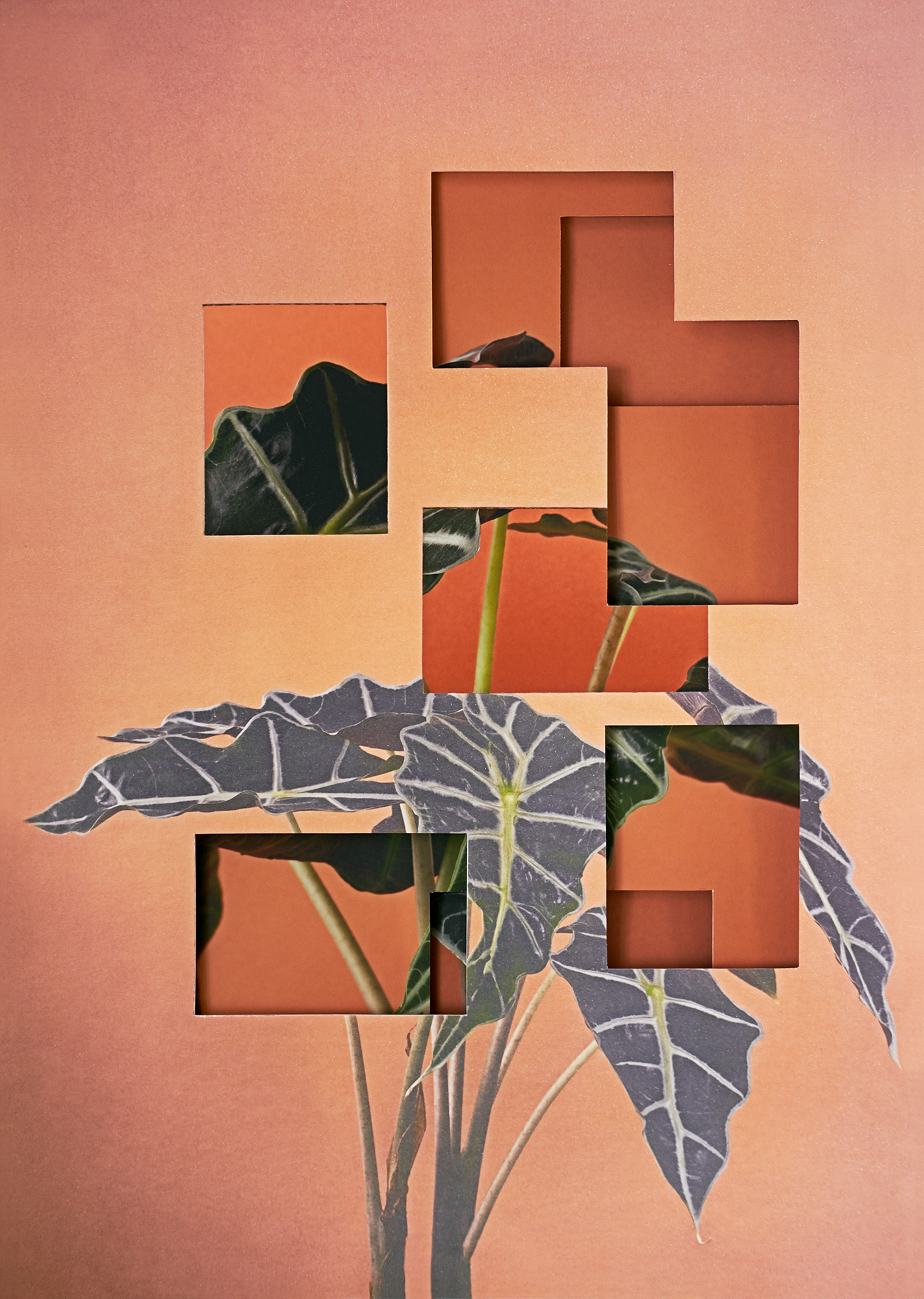Alma Haser,  Alocasia , 2018  Layered and cut digital pigment prints (3 layers), 47 x 35 cm total (approx. 18.5 x 13.75 in), edition of 7   Inquire