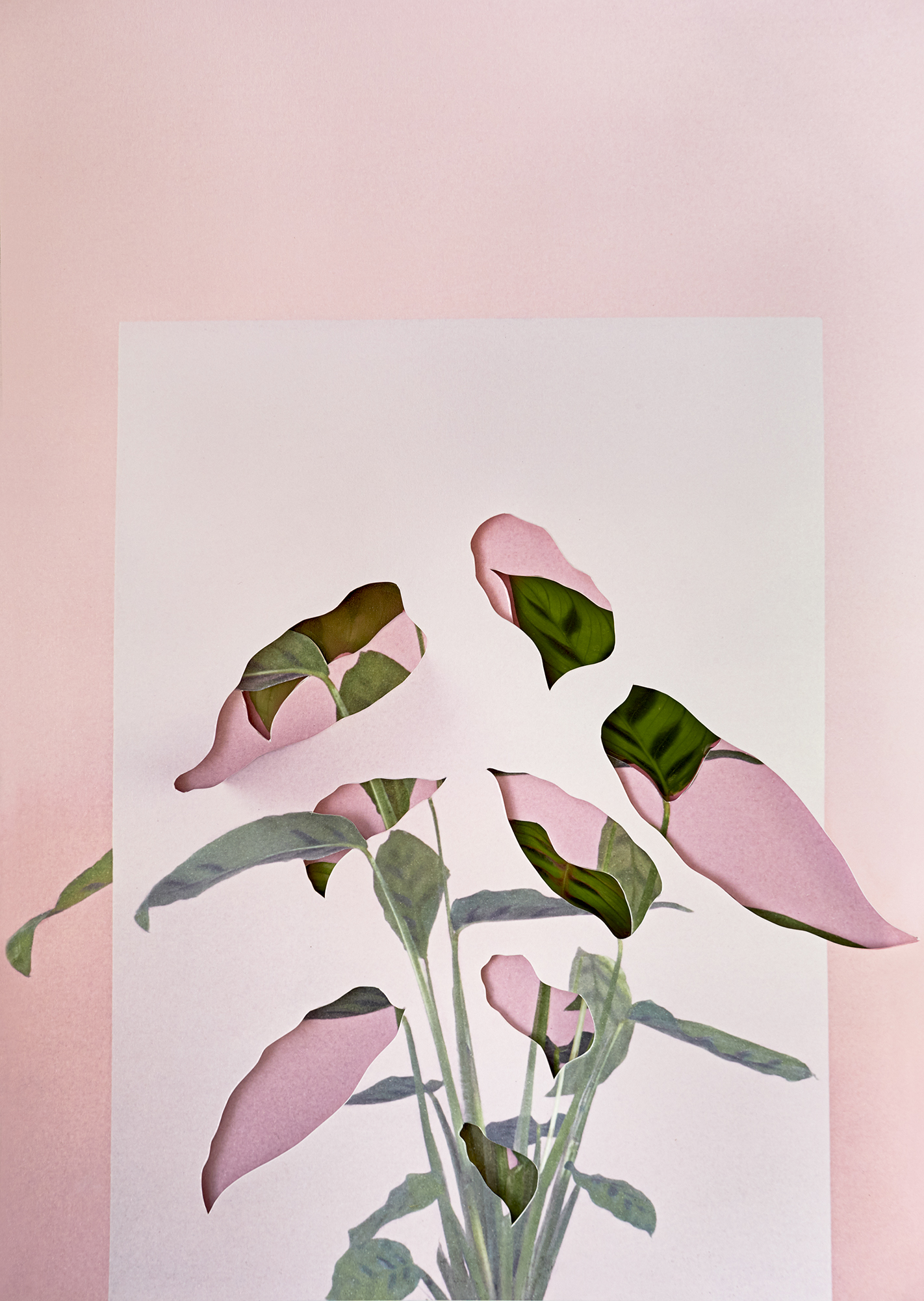 Alma Haser,  Calatheas , 2018  Layered and cut digital pigment prints (3 layers), 47 x 35 cm total (approx. 18.5 x 13.75 in), edition of 7   Inquire
