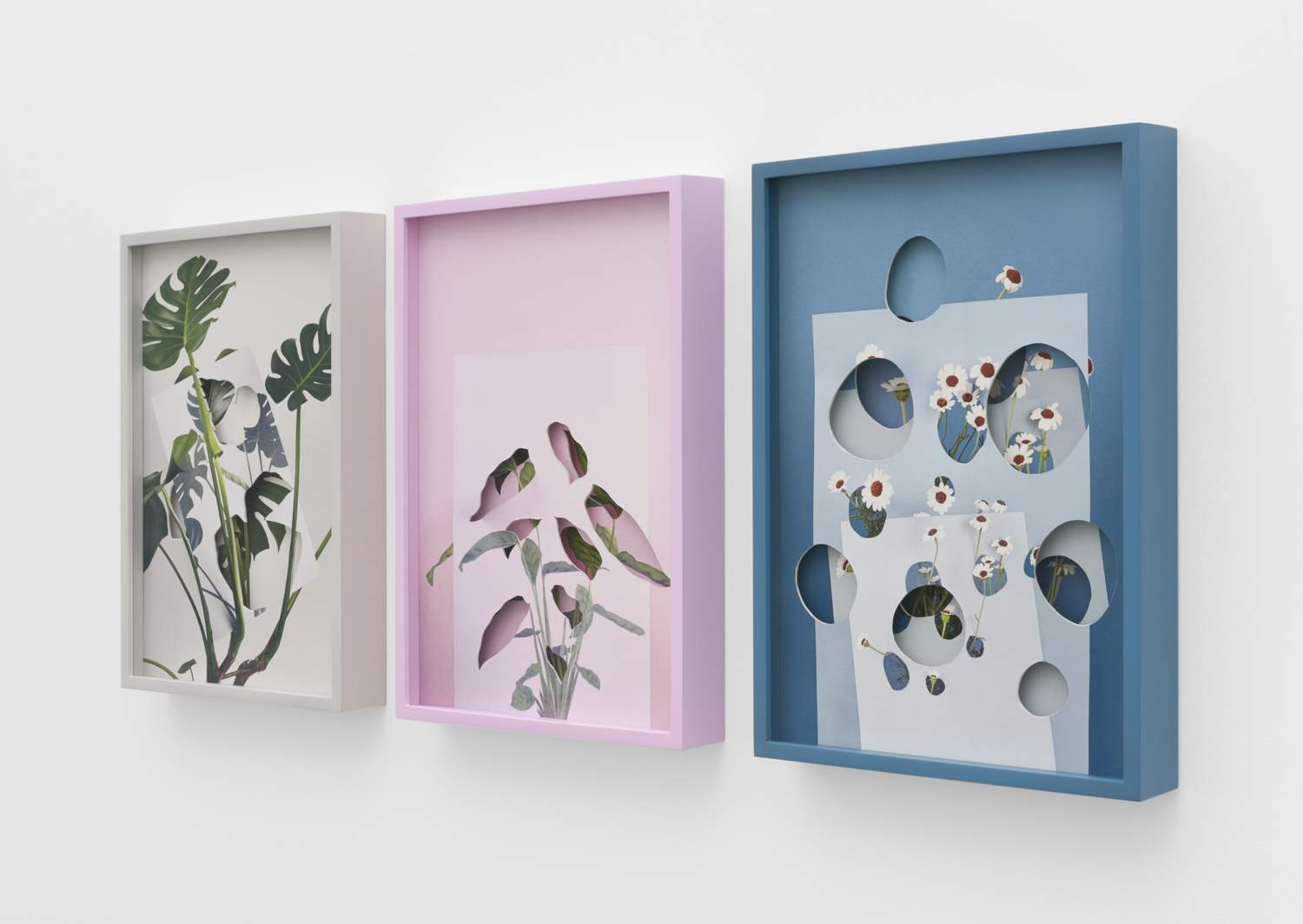 Alma Haser,  Pseudo Installation (Monstera Deliciosa, Calatheas, and Rhodanthemum ), 2018  (3) layered and cut digital pigment prints, 47 x 35 cm total (approx. 18.5 x 13.75 in) each with custom color frames, edition of 7   Inquire