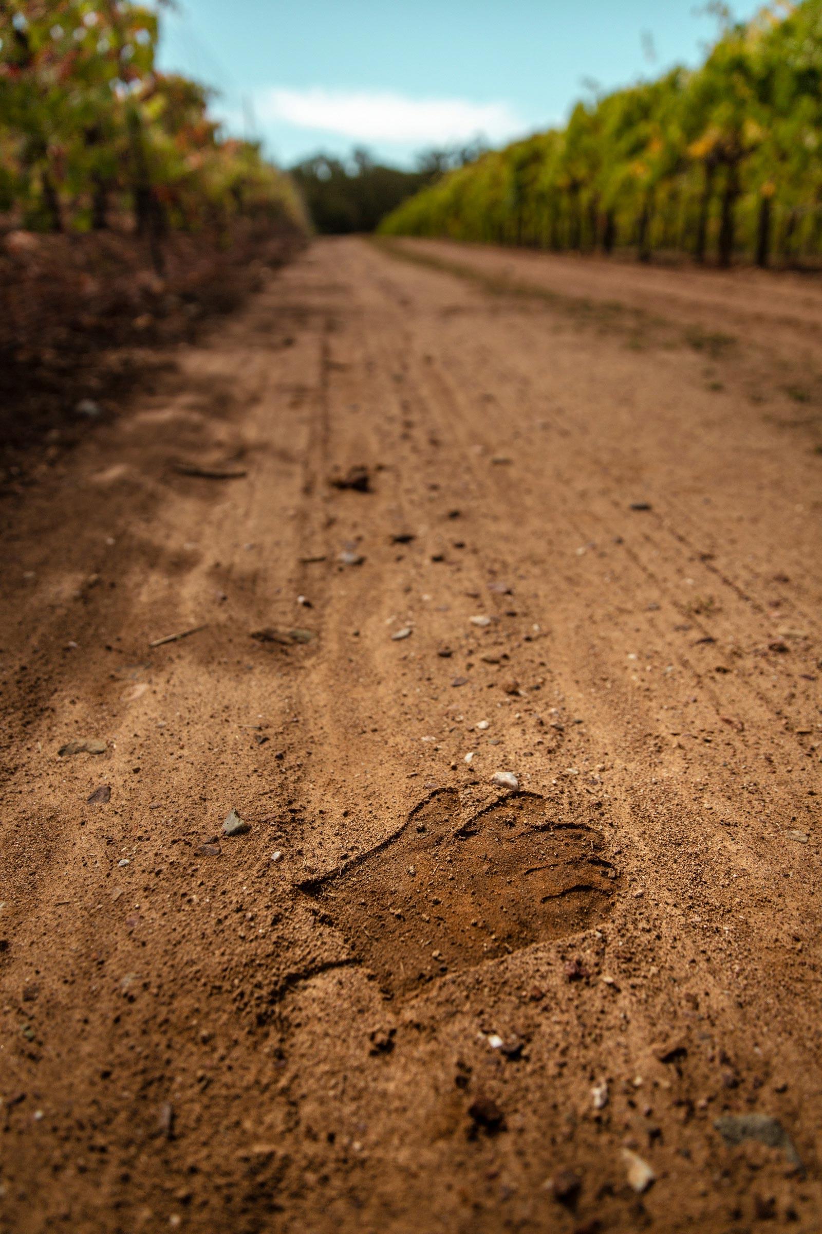 Evan-Lewandowski-Natural-Wines-136.jpg