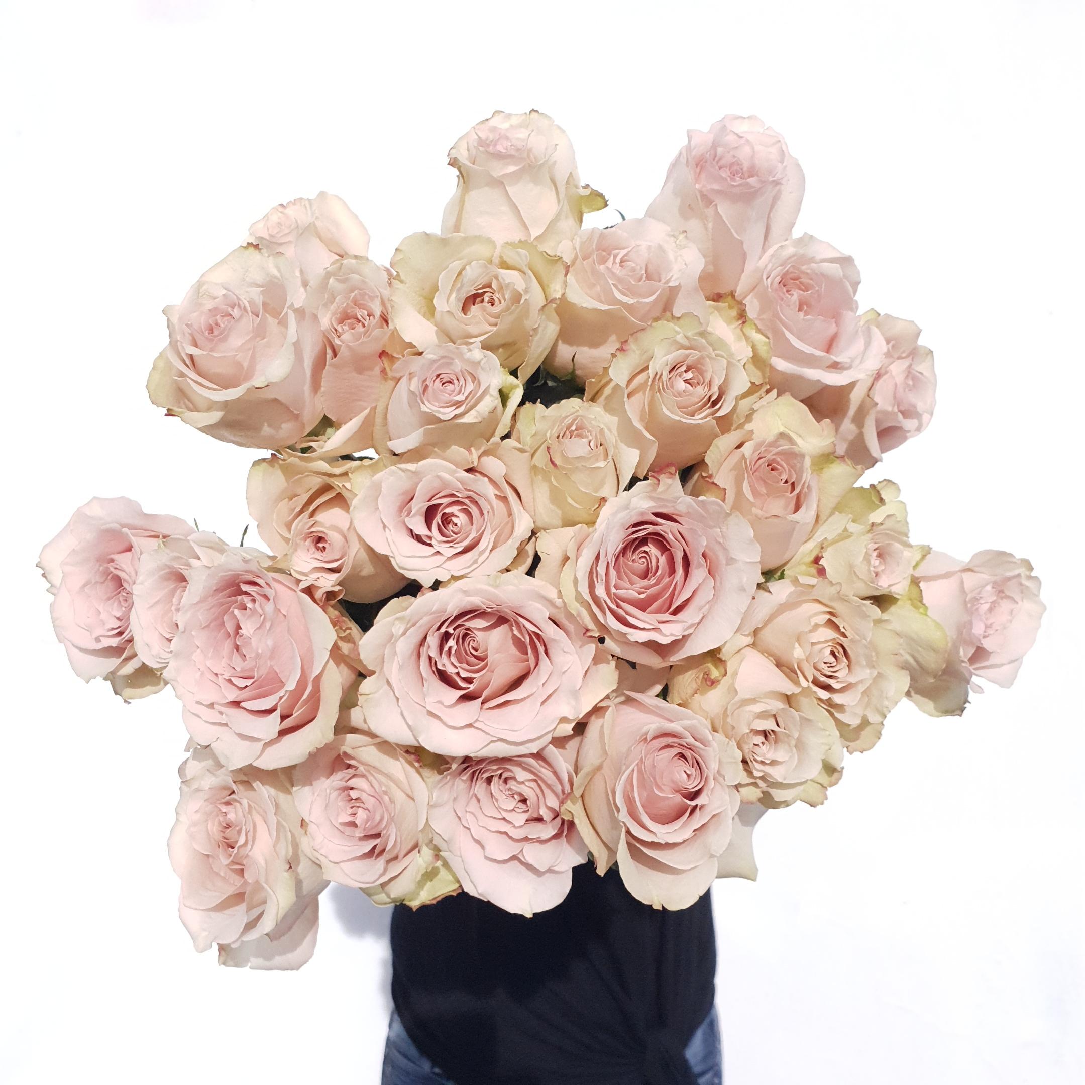 Latte Roses