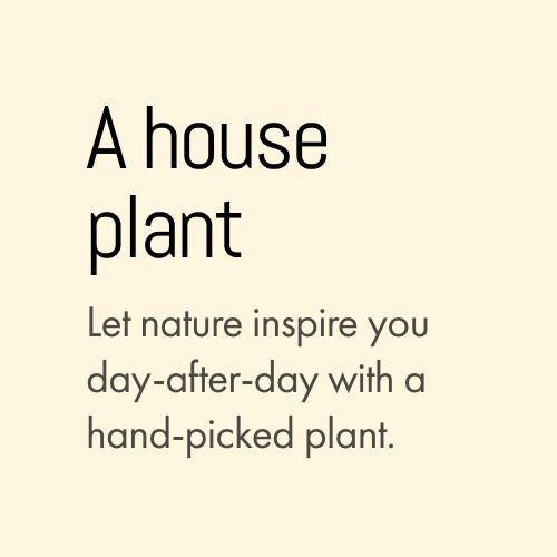 house-plants-rocknrosie-dunedin-florist.png