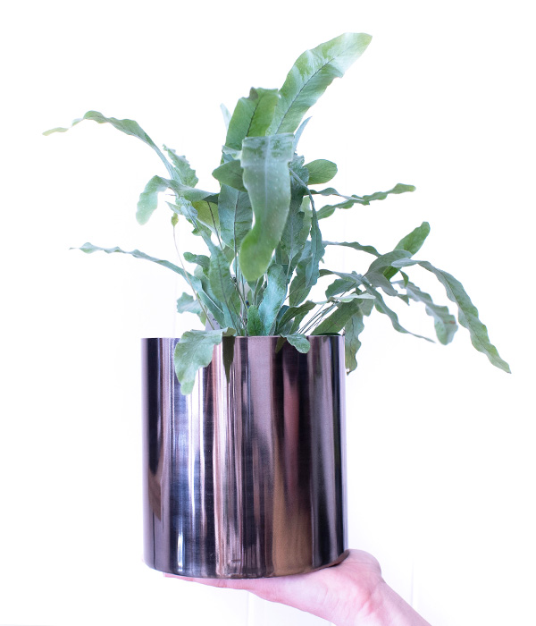 gift-shop-houseplants-jewellery-at-rocknrosie-dunedin-florist.jpg