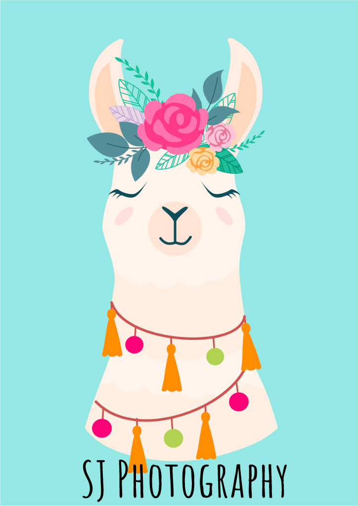 vector-illustration-of-cute-cartoon-llama-with-flowers-stylish-for-vector-id991180016(1).jpg